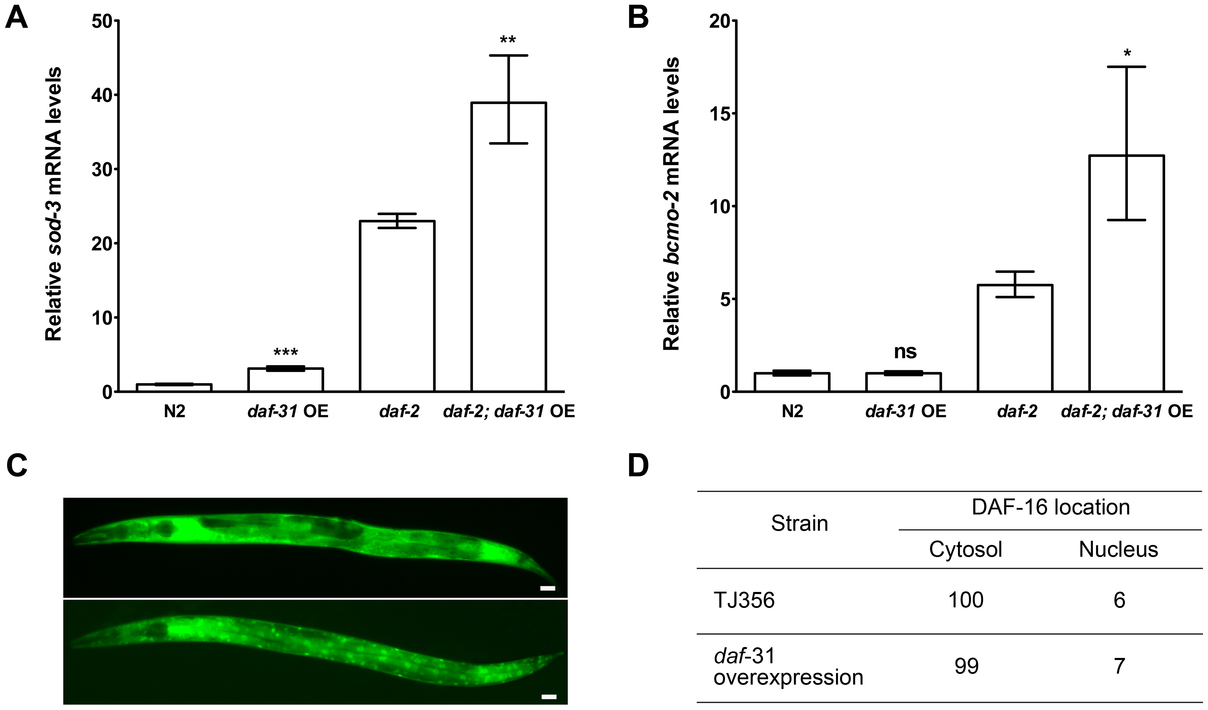 <i>daf-31</i> overexpression stimulates the transcriptional activity of DAF-16 without influencing the subcellular localization of DAF-16.
