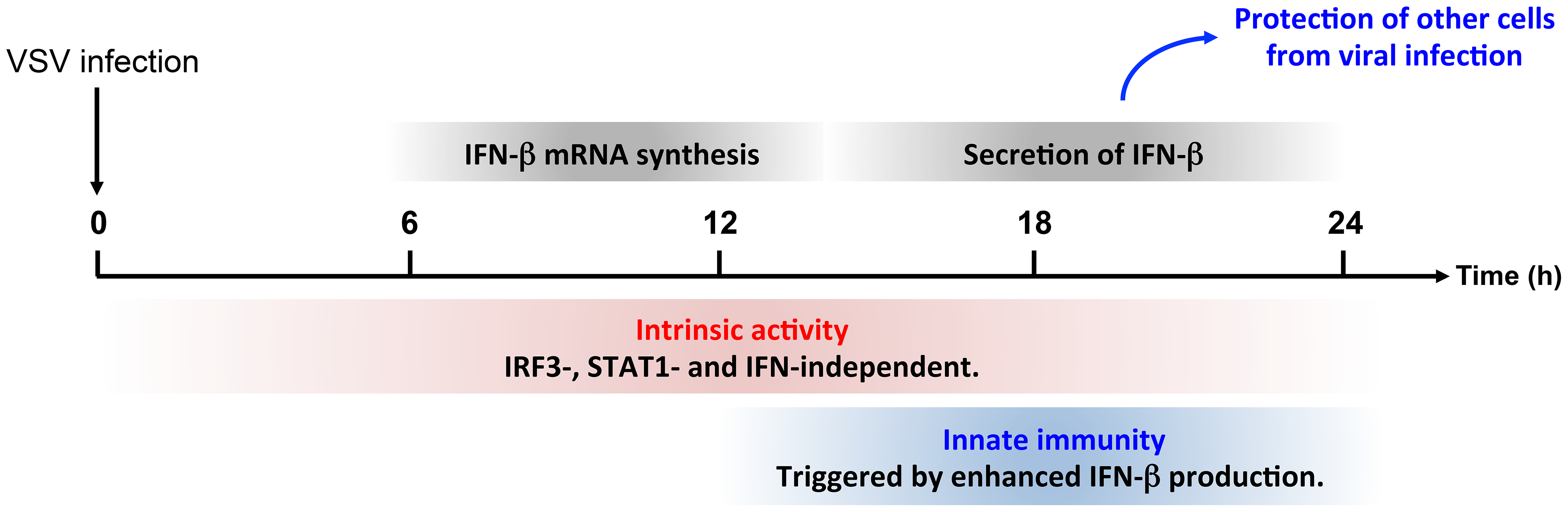 Intrinsic and innate immune properties of PMLIV during viral infection.