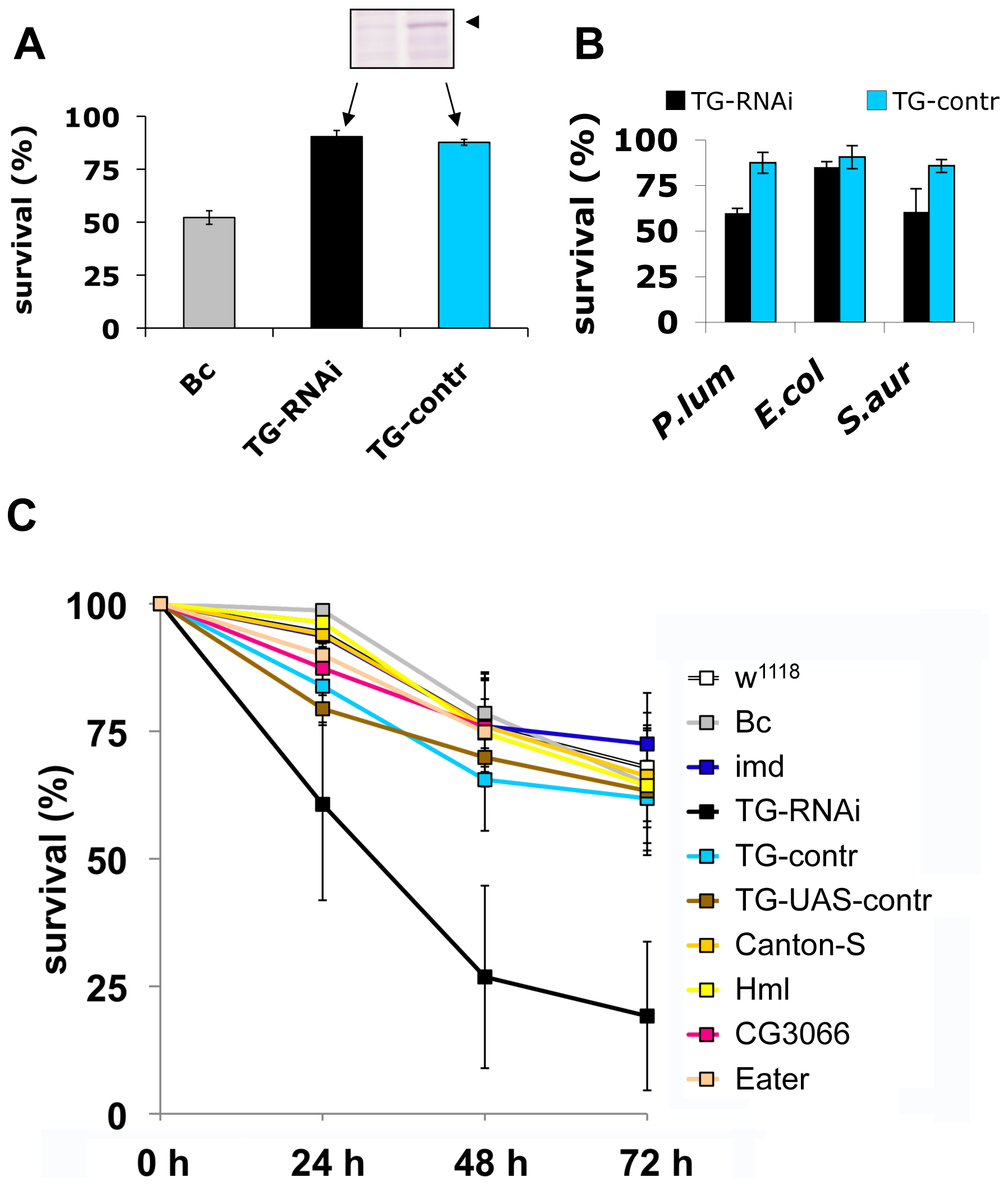 Larvae with reduced TG levels show immune defects.