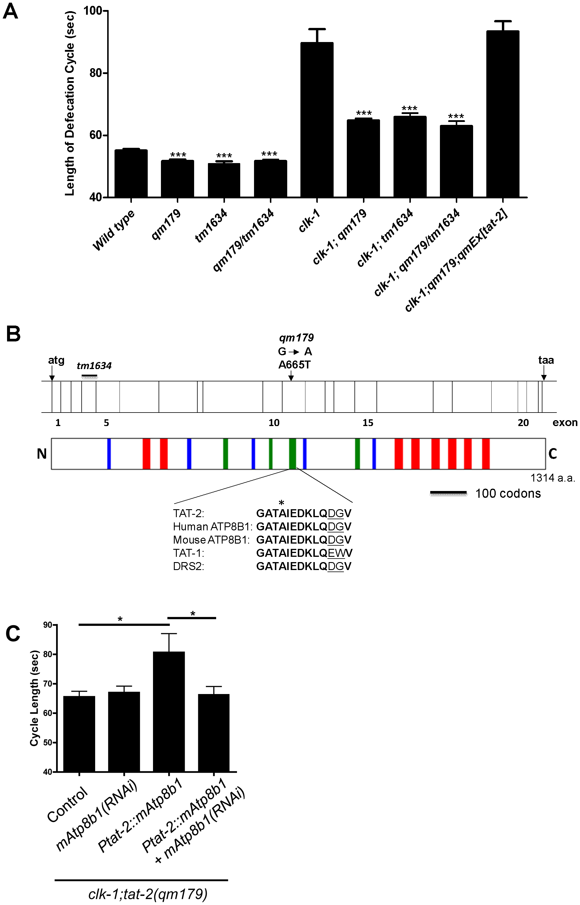 <i>qm179</i> is allelic to <i>tat-2</i>, which encodes a protein homologous to mammalian ATP8B1.