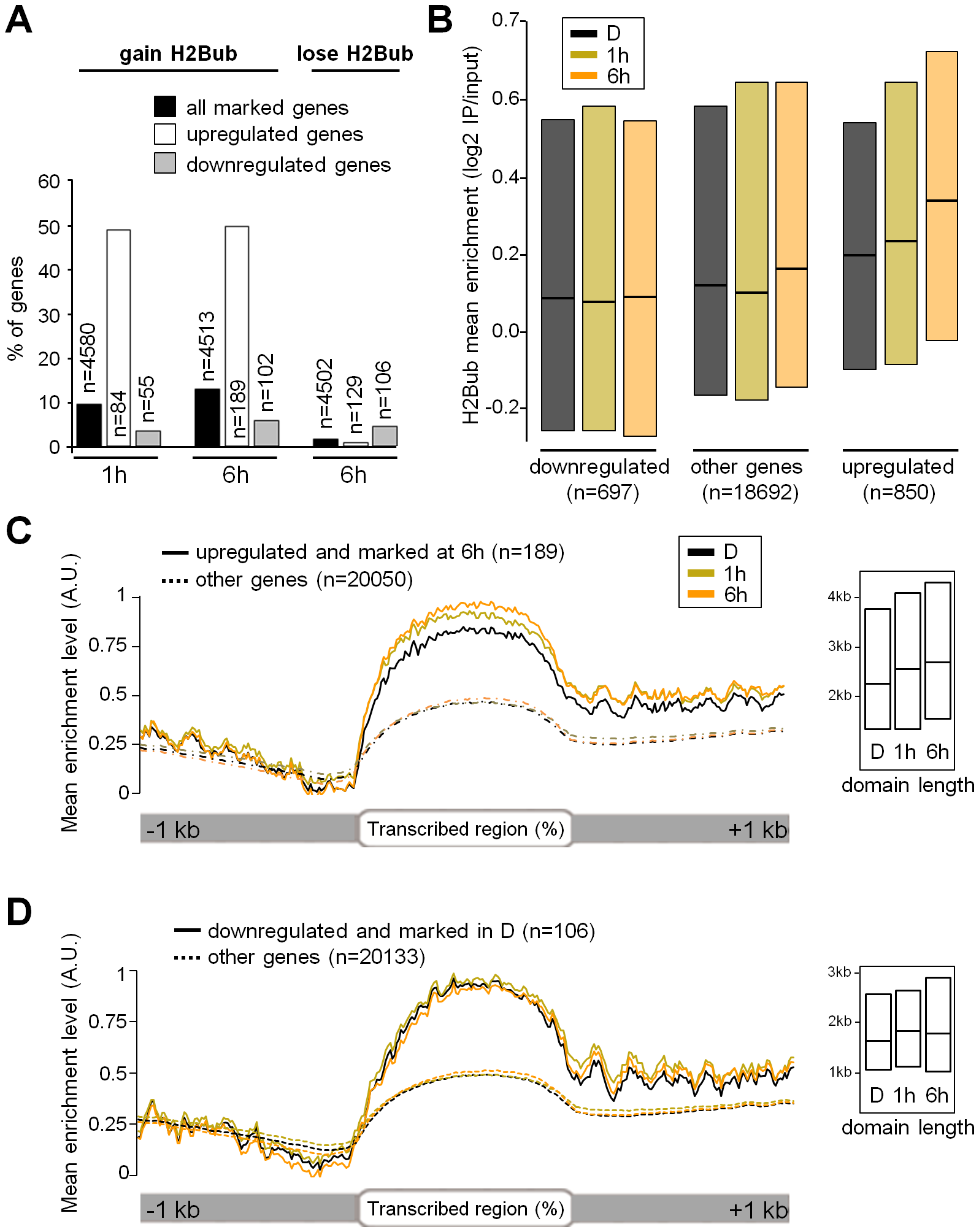 Light-induced upregulation associates with H2Bub enrichment over transcribed regions.