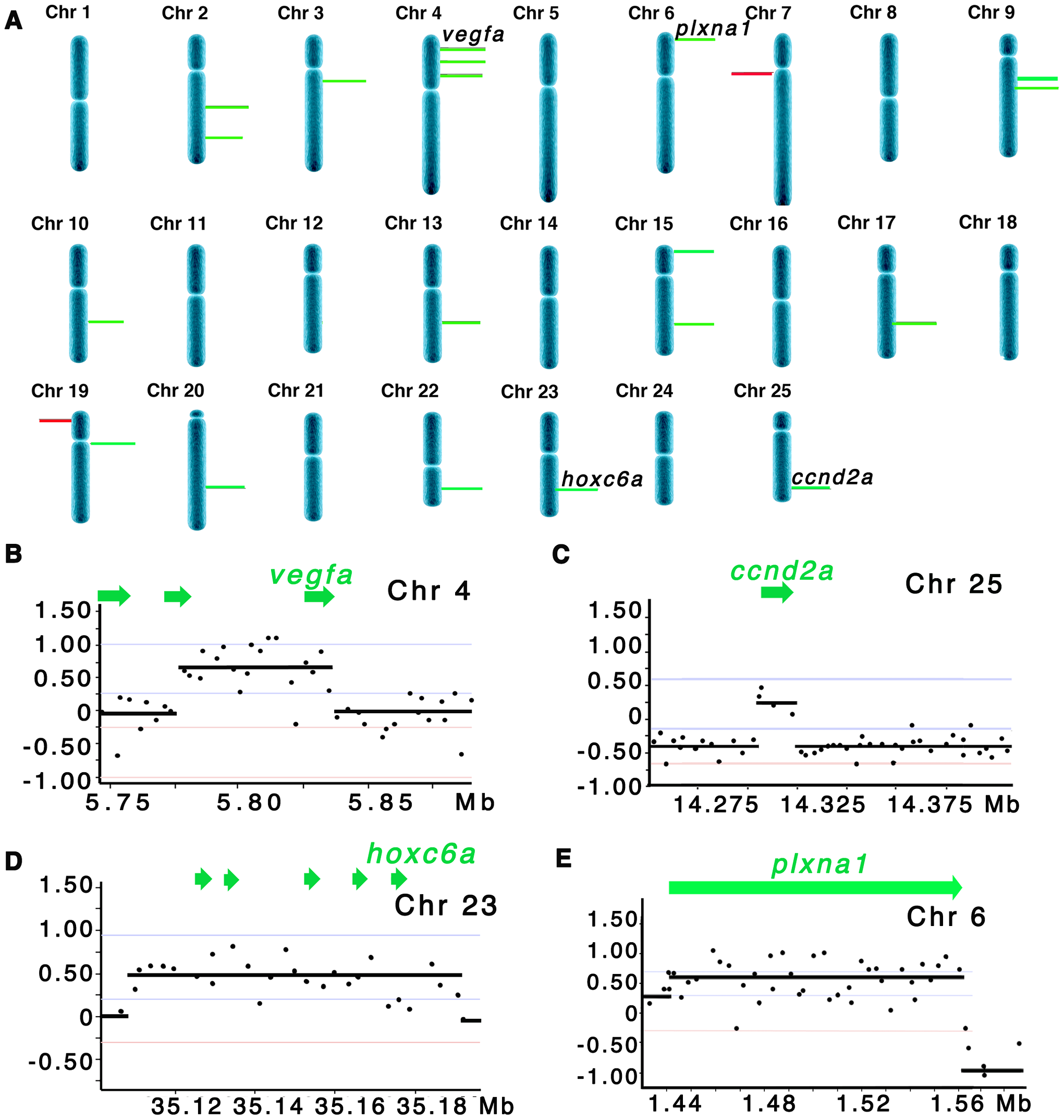 Array CGH reveals cancer-specific chromosomal abnormalities in zebrafish ERMS.