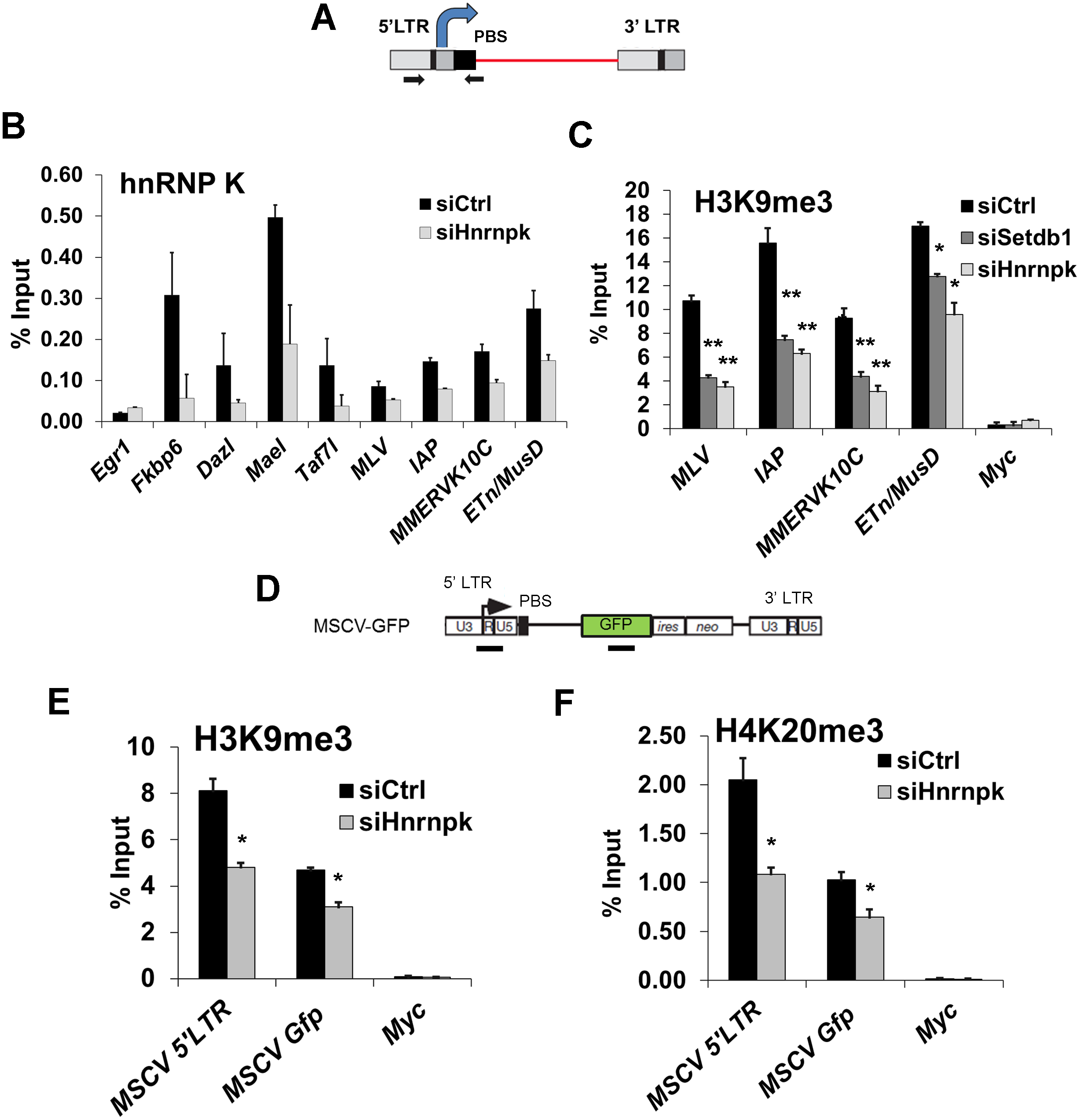 hnRNP K is bound at ERVs and is required for H3K9me3 deposition at proviral chromatin.