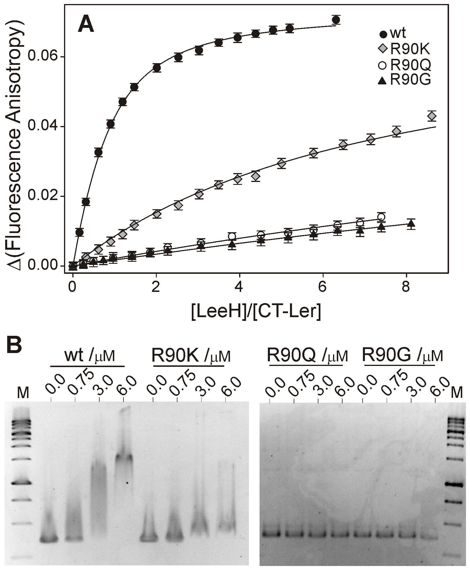 Arg90 is essential for DNA-binding.