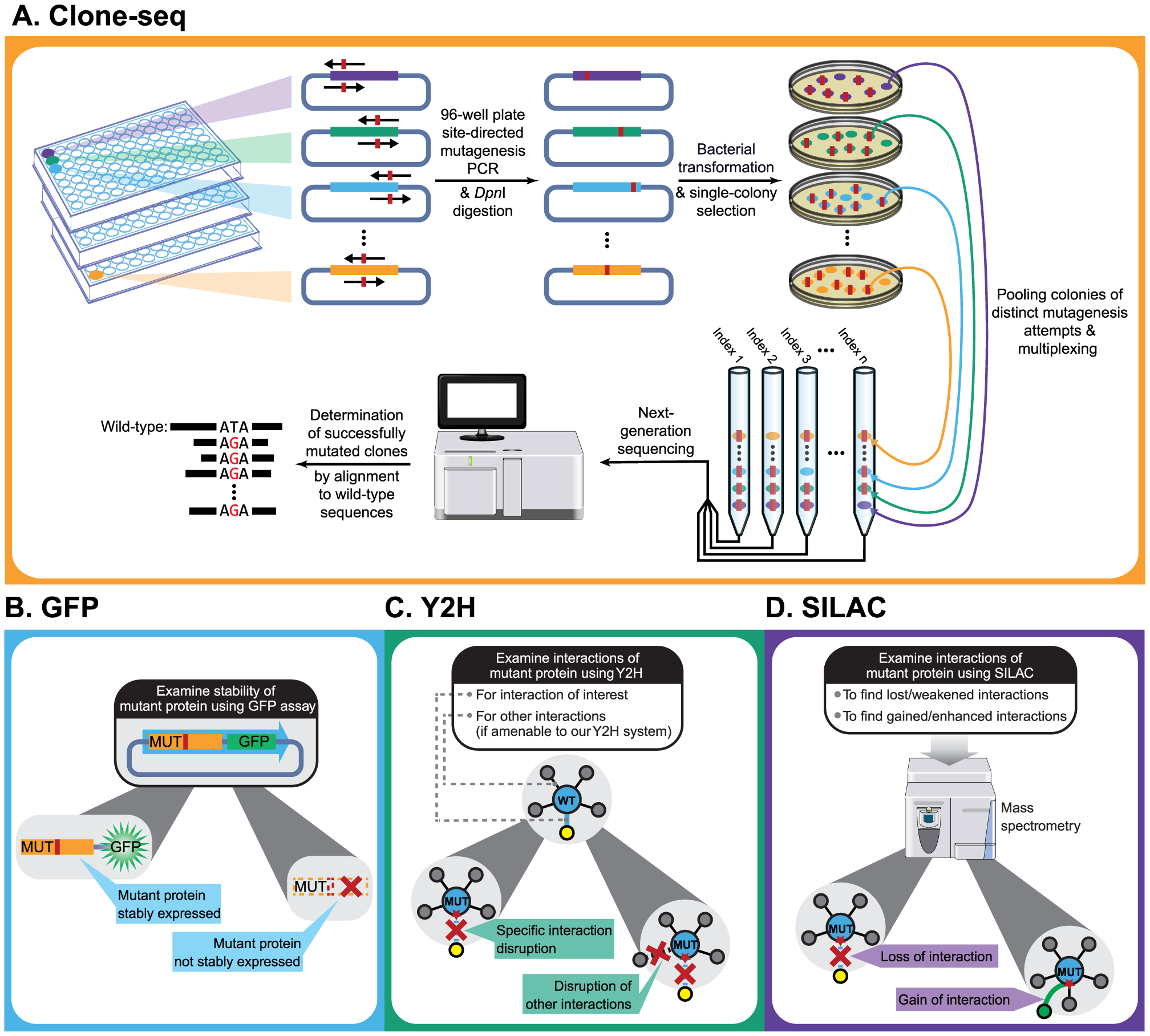 Schematic of our comparative interactome-scanning pipeline.