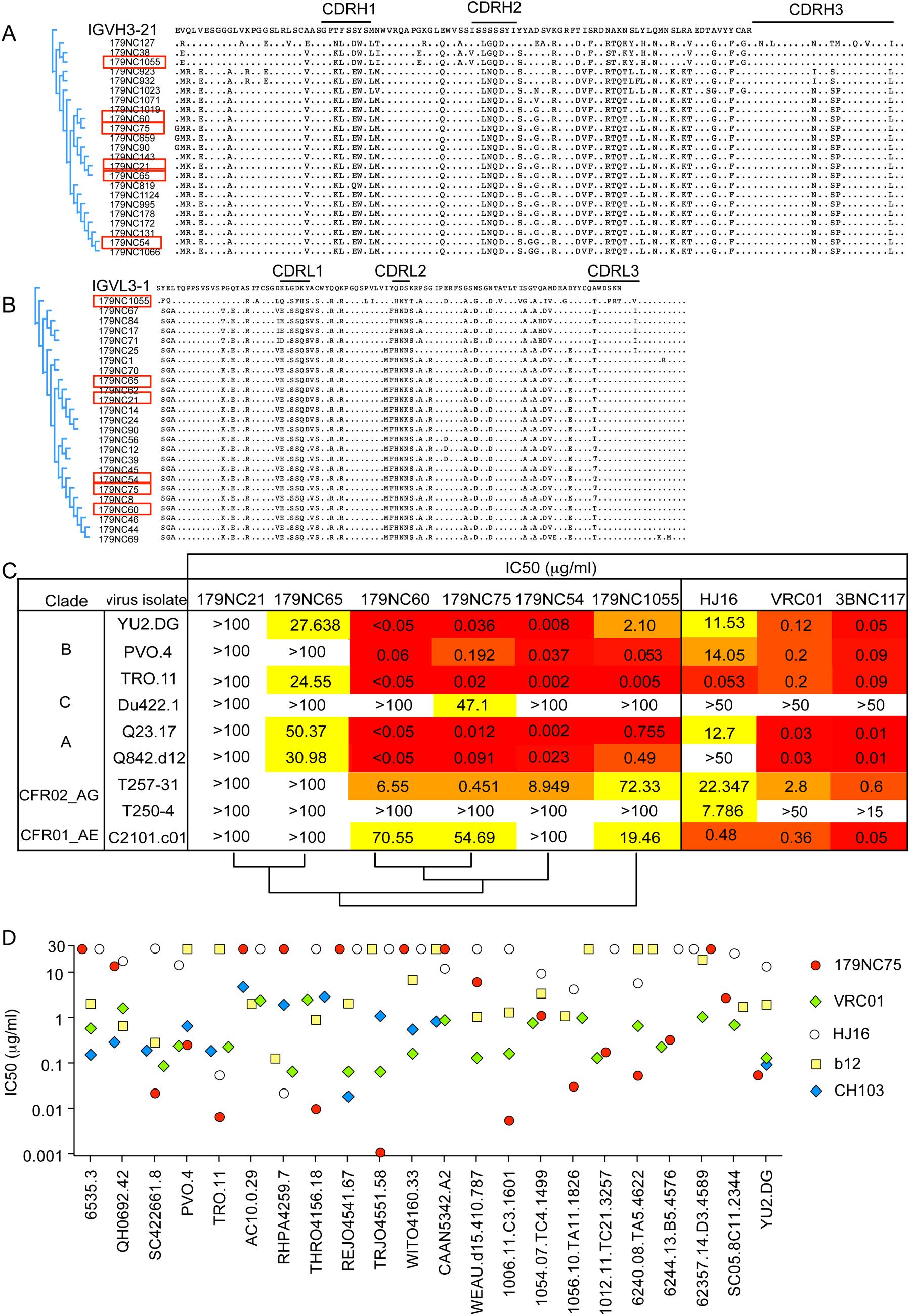 179NC75 clonal family variants.