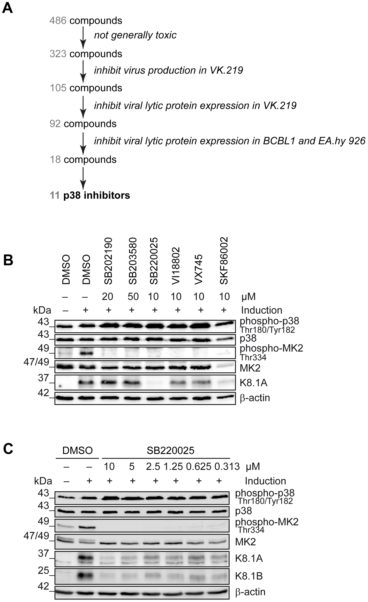 Identification of cellular kinases involved in KSHV reactivation.