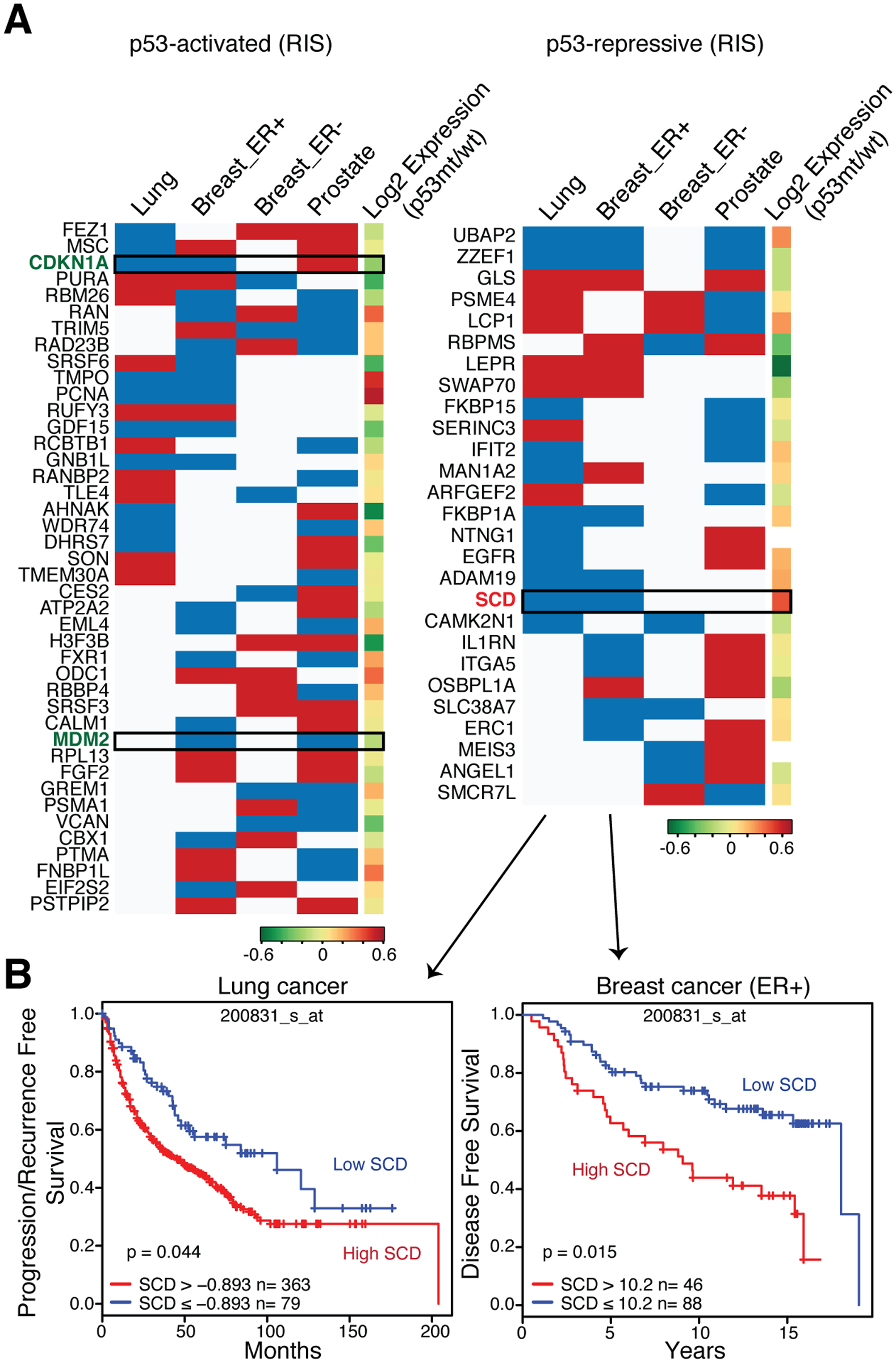 Prognostic role of Rcade-derived p53-targets in cancer.