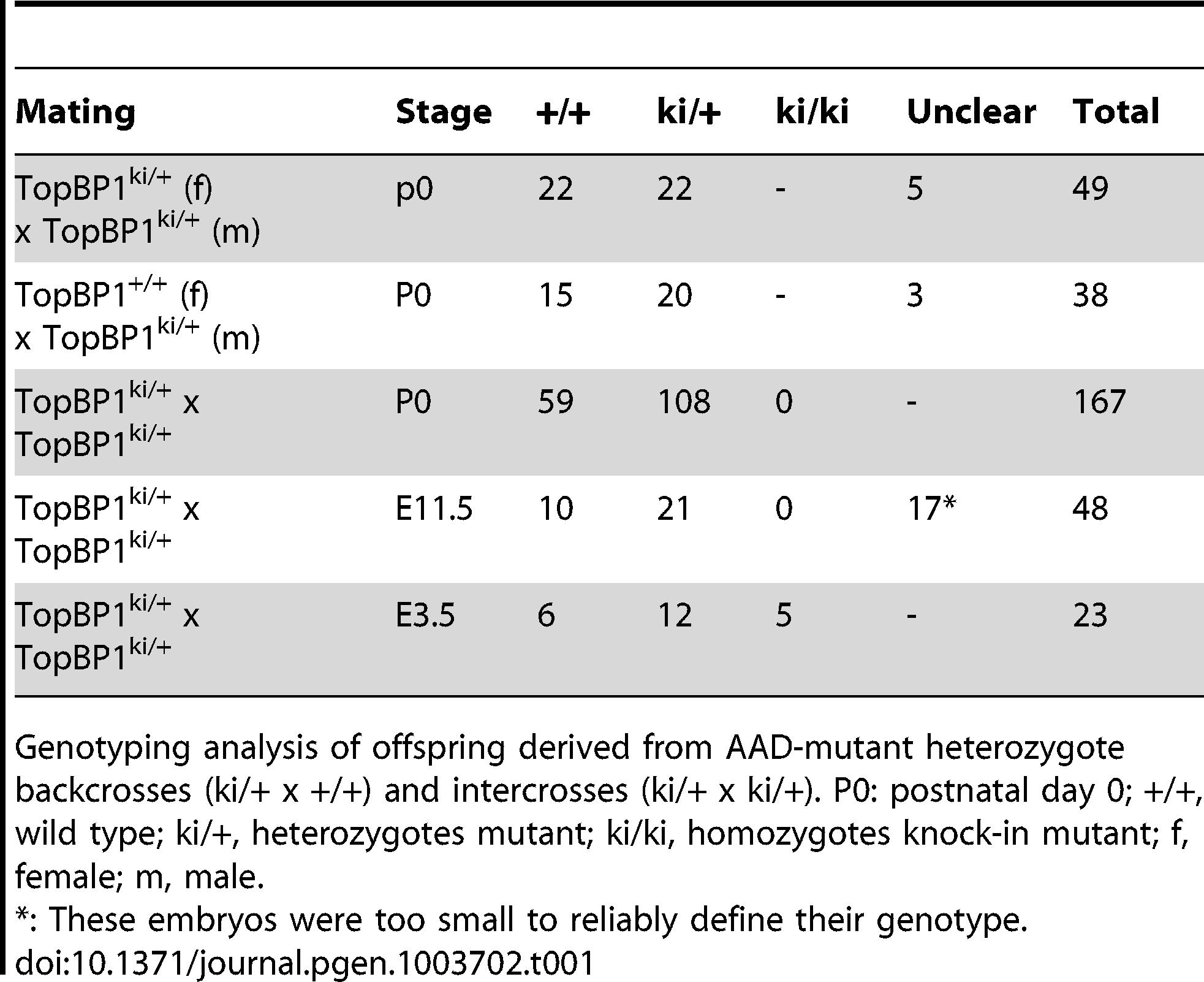 Genotype distribution of offspring from TopBP1<sup>ki/+</sup> breeding.