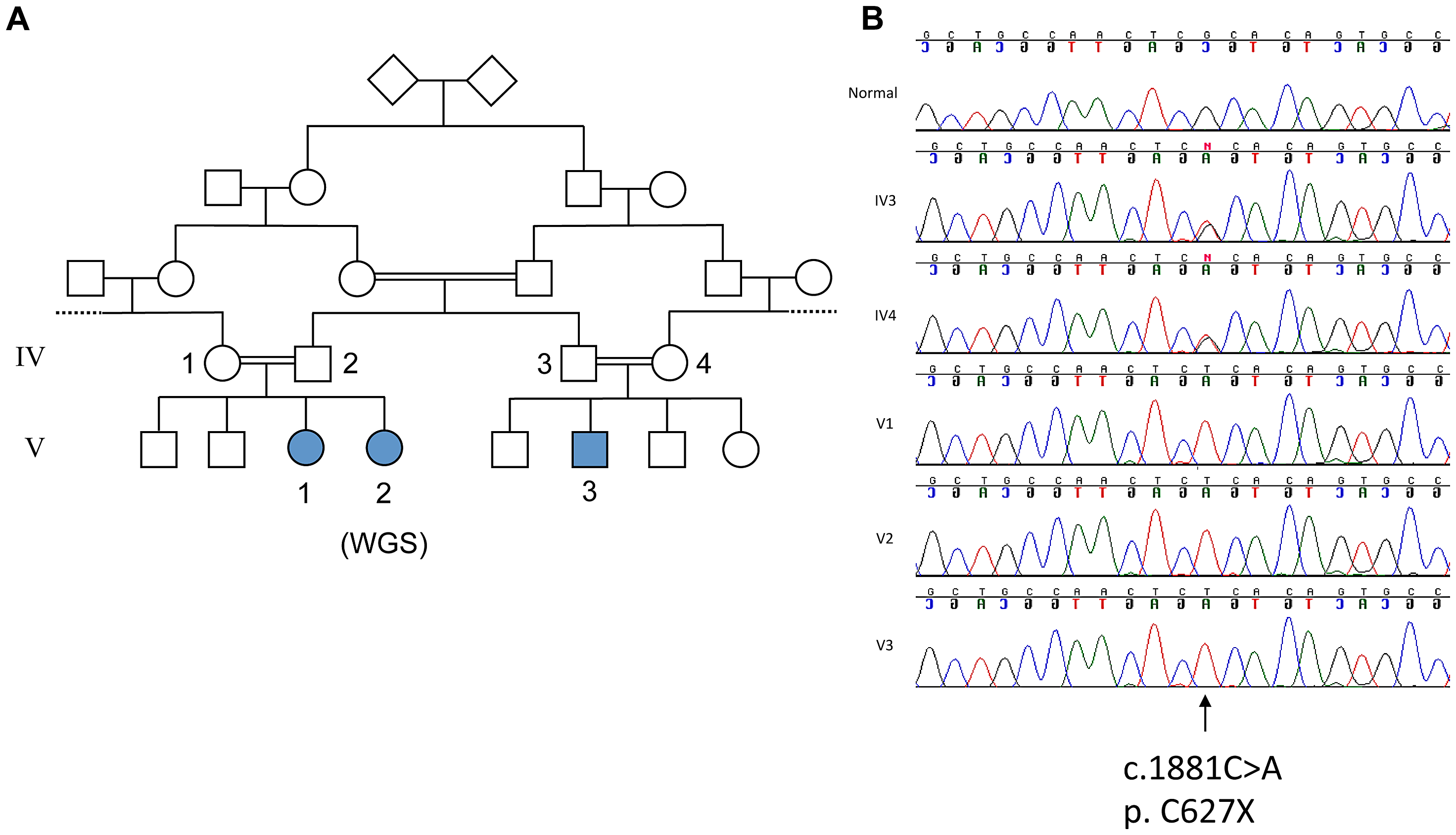 Genetic analysis of family with ataxia and cognitive impairment.