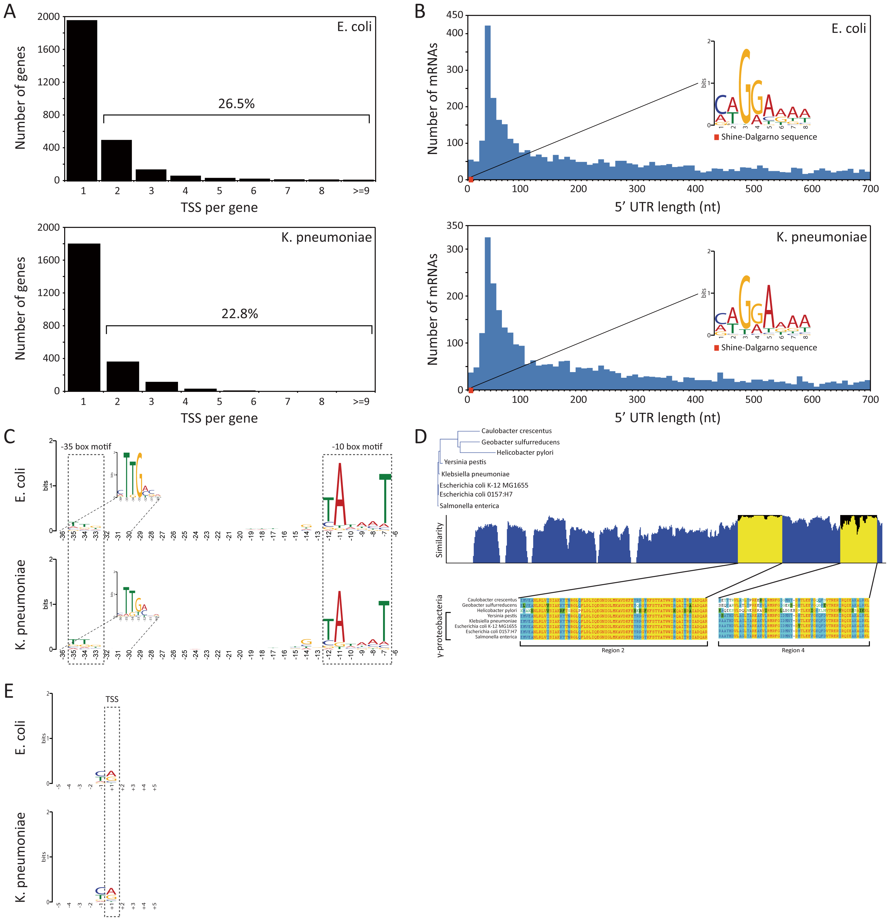 TSS annotation and structure of promoter region and 5′ UTR.