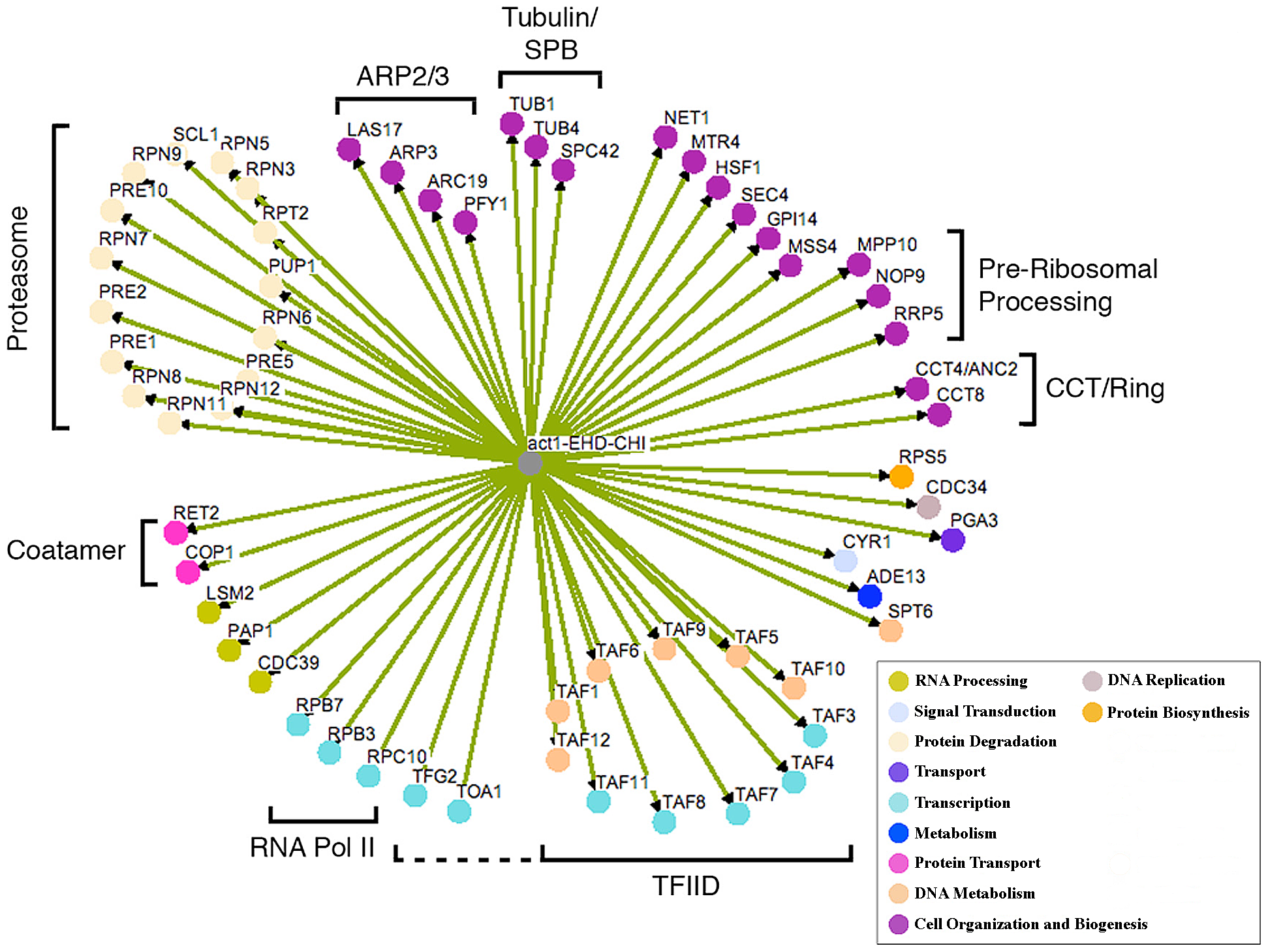 Network of CHI interactions between <i>act1Δ</i> and null alleles for essential genes.