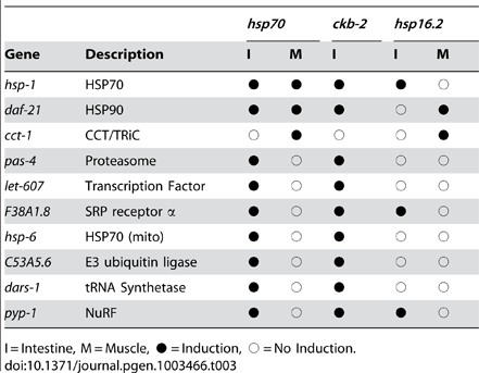 Tissue-selective patterns for multiple HSR reporters.