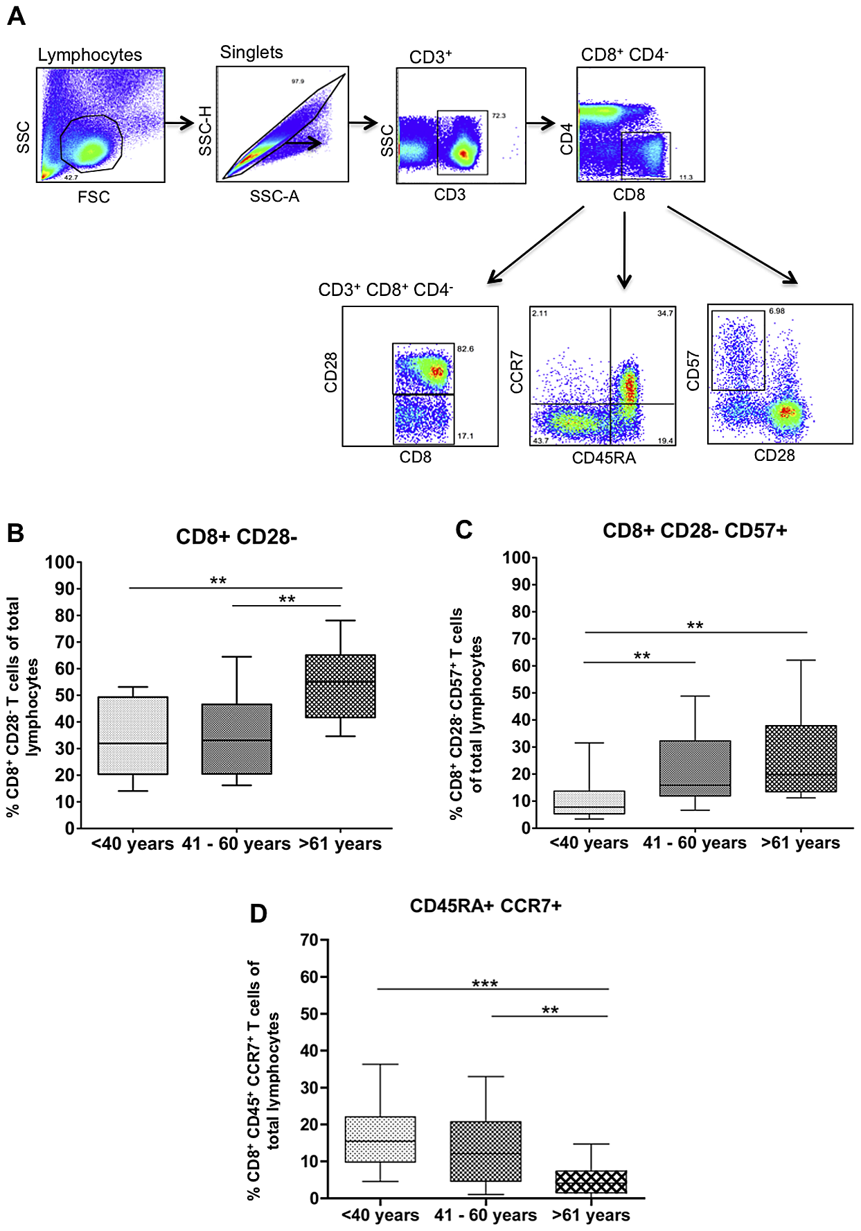 Ageing results in increased frequencies of highly-differentiated CD8+ T cells and decreased frequencies of naïve CD8+ T cells.