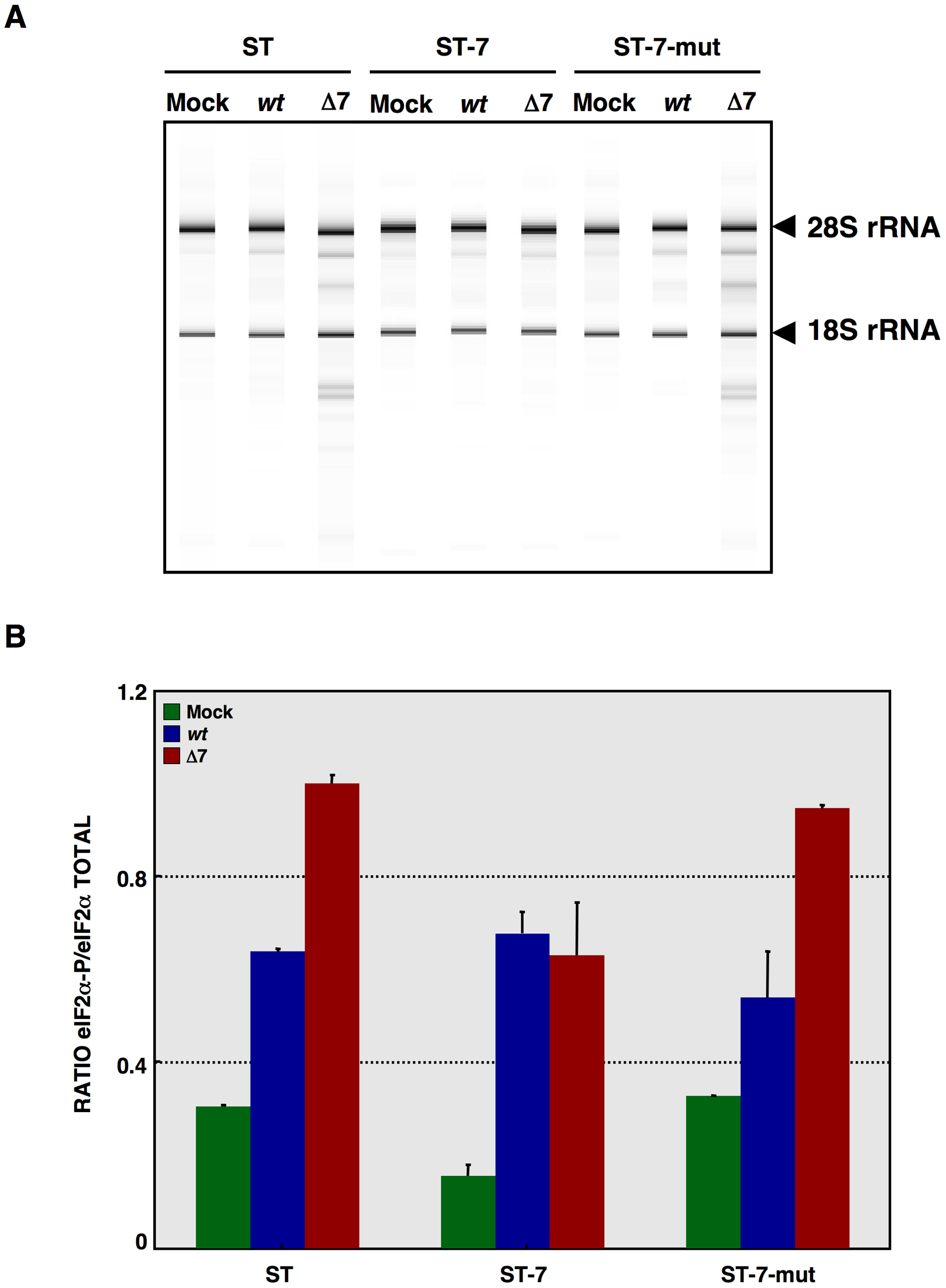 Effect of mutated protein 7 provided <i>in trans</i> on RNA degradation and eIF2α phosphorylation.