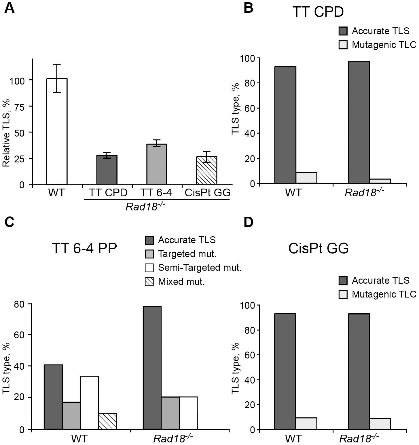 TLS in <i>Rad8<sup>−/−</sup></i> mouse embryo fibroblasts.