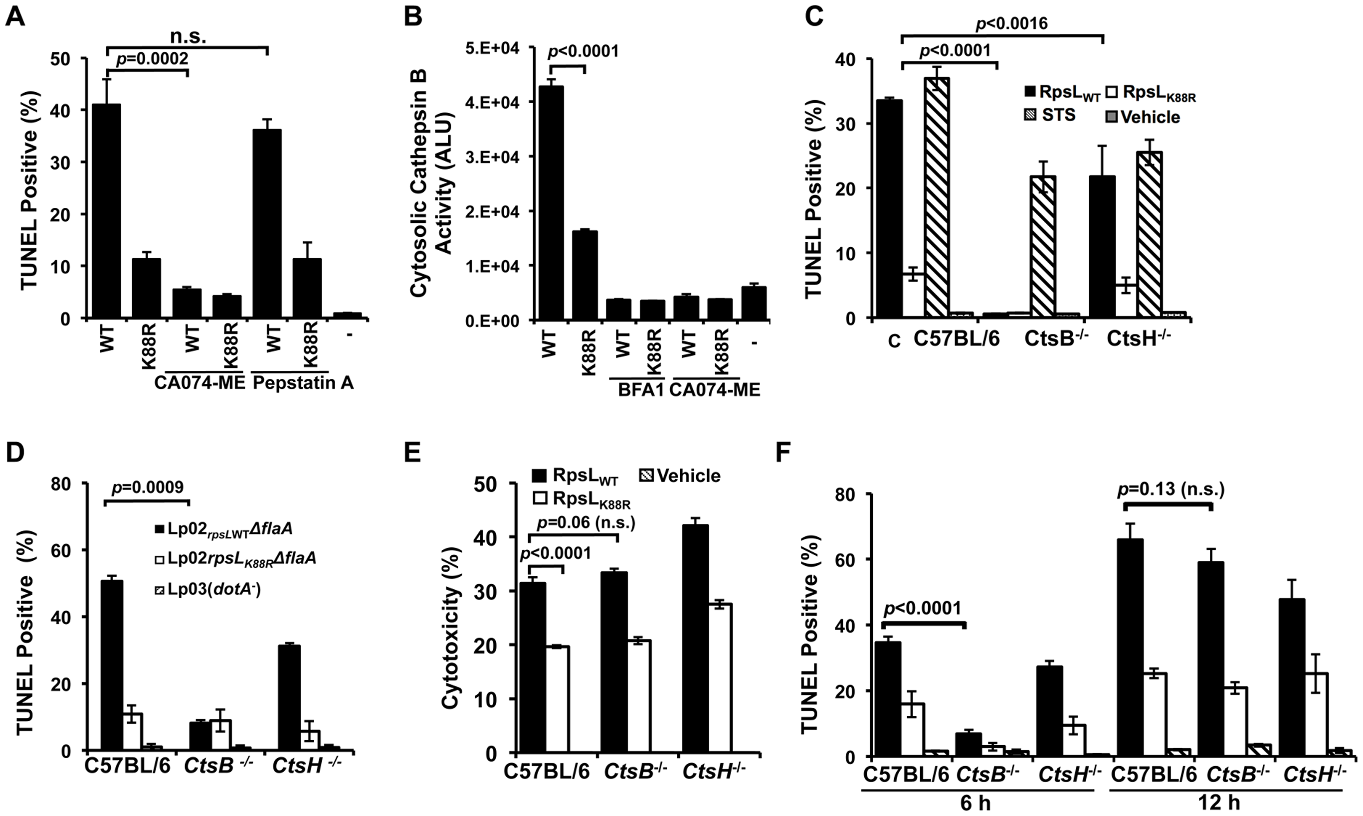 Cathepsin B is required for efficient RpsL-induced cell death in macrophages.
