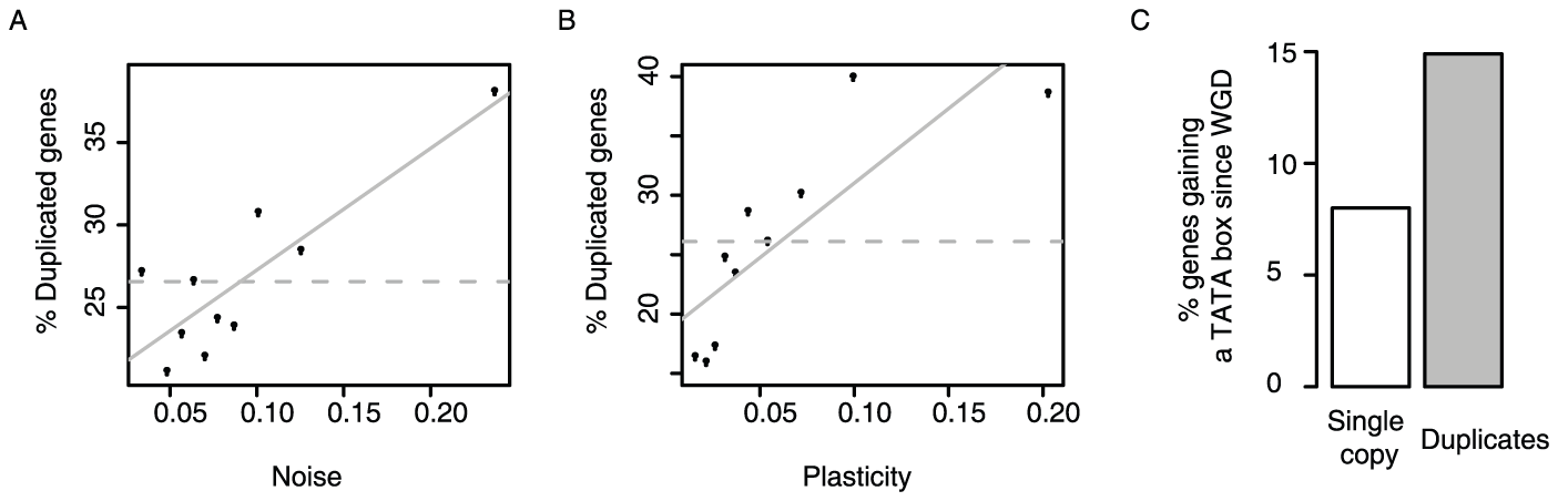 Gene duplicates are enriched amongst genes with the highest expression noise and plasticity, and they tend to gain TATA promoters.