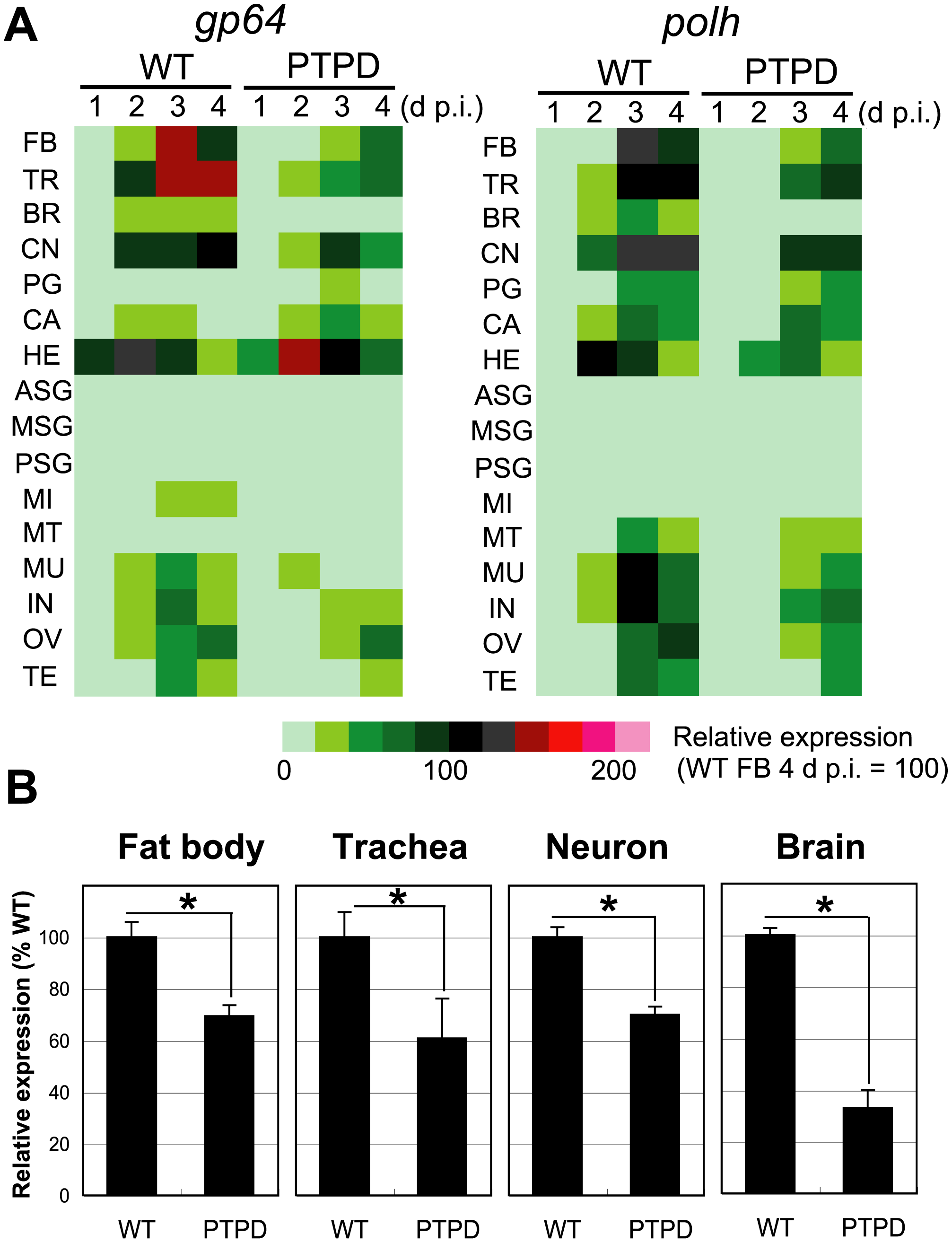 Reduced expression of viral genes in tissues of larvae infected with a <i>ptp</i>-disrupted virus.