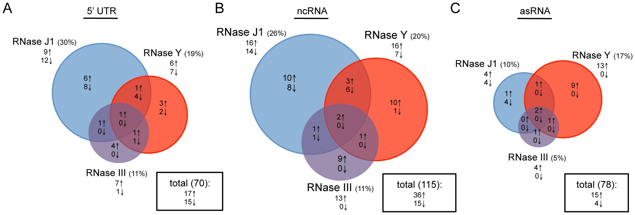Effects of RNase J1, Y, and III depletion on abundance of <i>B. subtilis</i> regulatory RNAs.