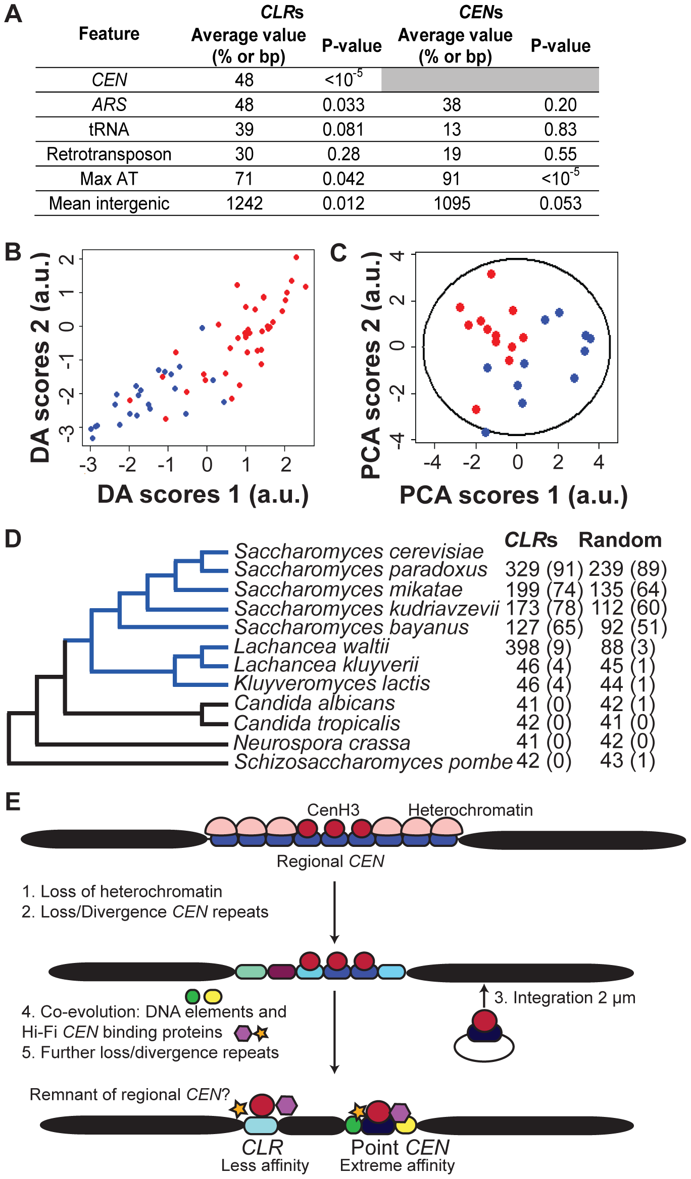 Genomic features of <i>CLR</i>s.