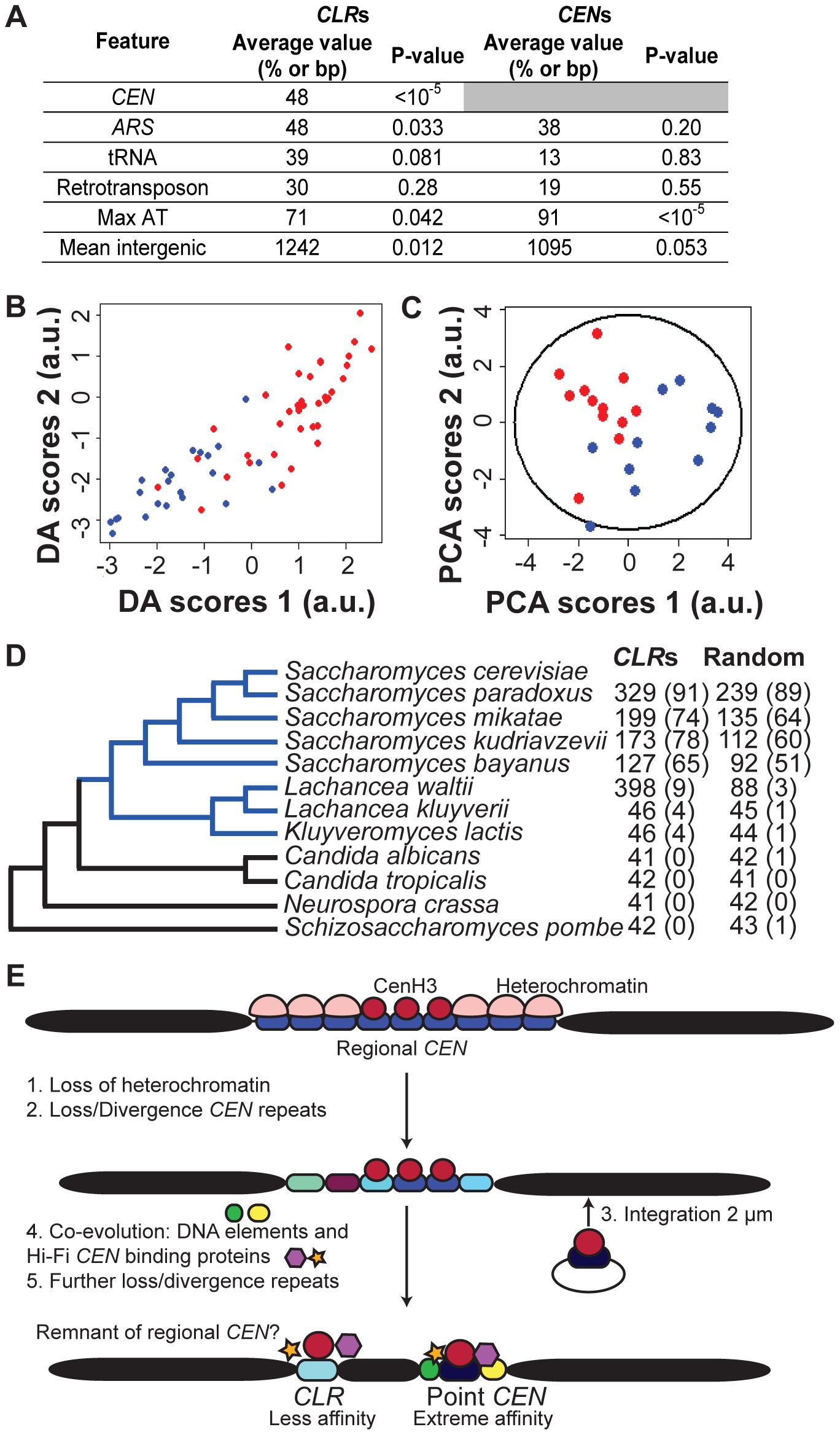 Genomic features of <i>CLR</i>s.