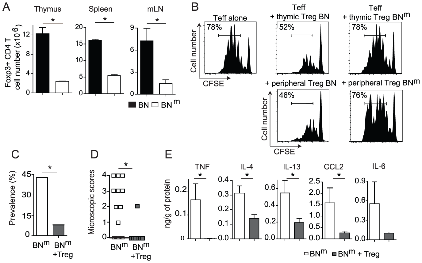 Impaired suppressive function of BN<sup>m</sup> Treg is involved in the development of intestinal lesions.