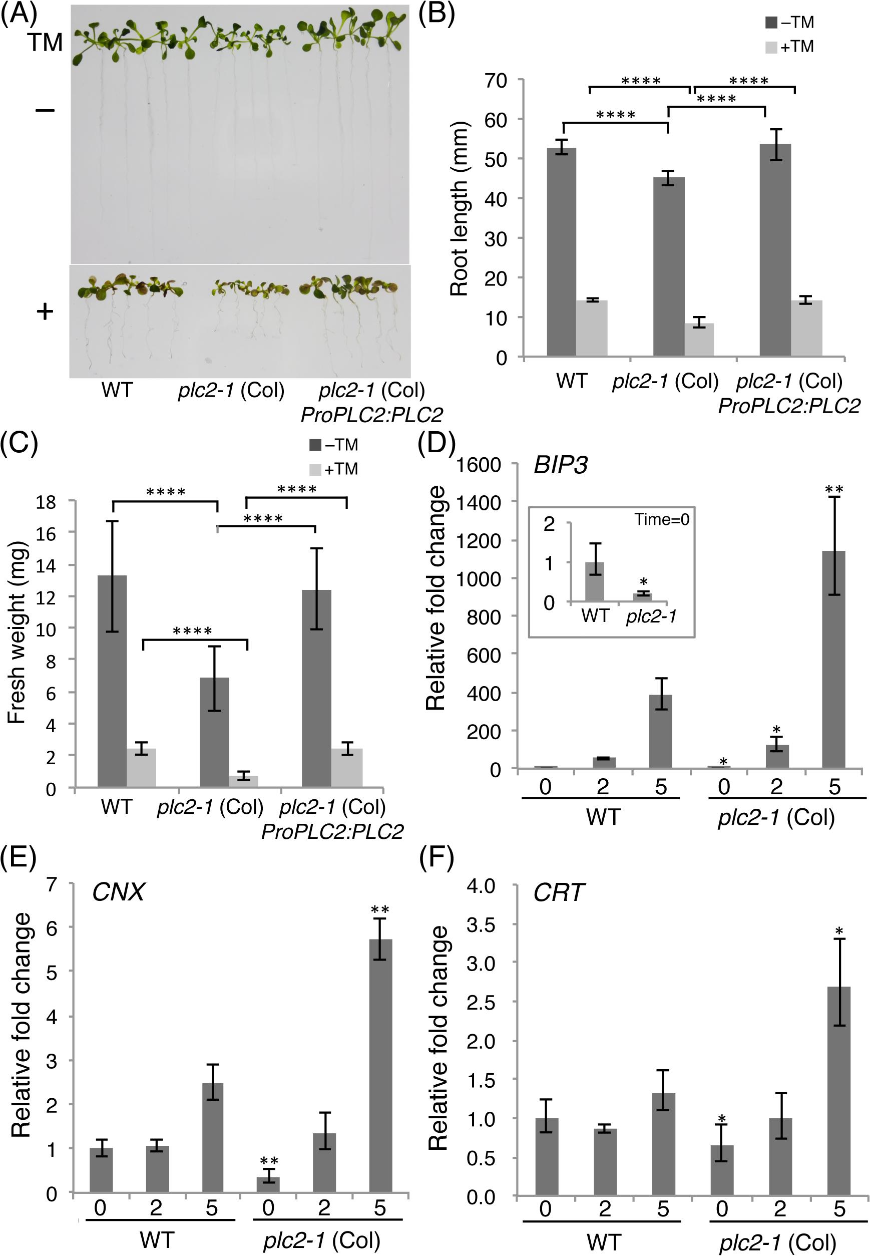 Enhanced susceptibility of the <i>plc2-1</i> mutant to the ER stress.