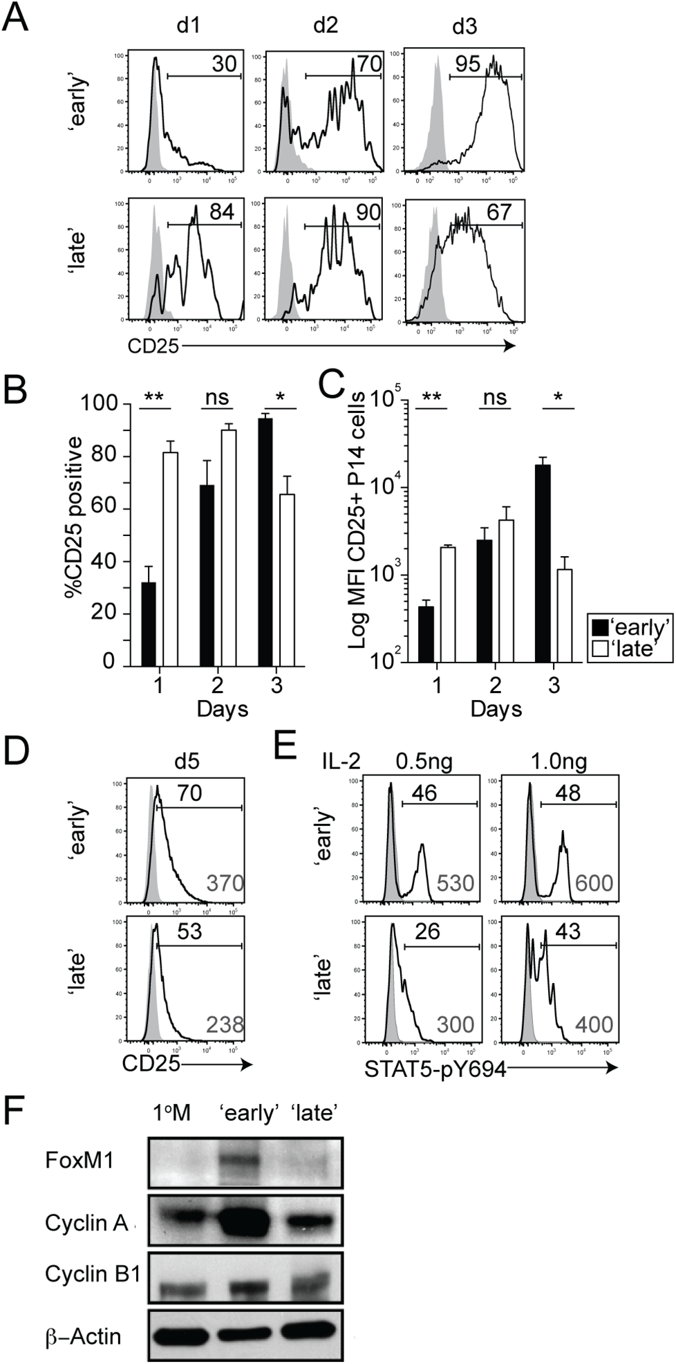 The timing of stimulation regulates IL-2 sensitivity and expression of cell-cycle related proteins.