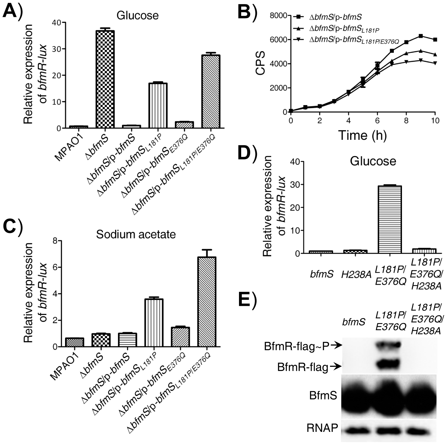 Effect of DK2 lineage-specific amino acid substitutions in BfmS on the activation of BfmR.