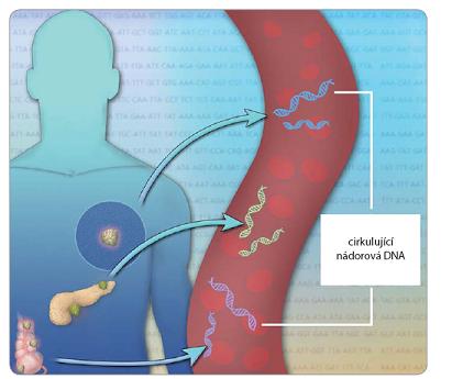 Variabilita ctDNA detekovatelné v krvi pacientů s pokročilým nádorovým onemocněním.