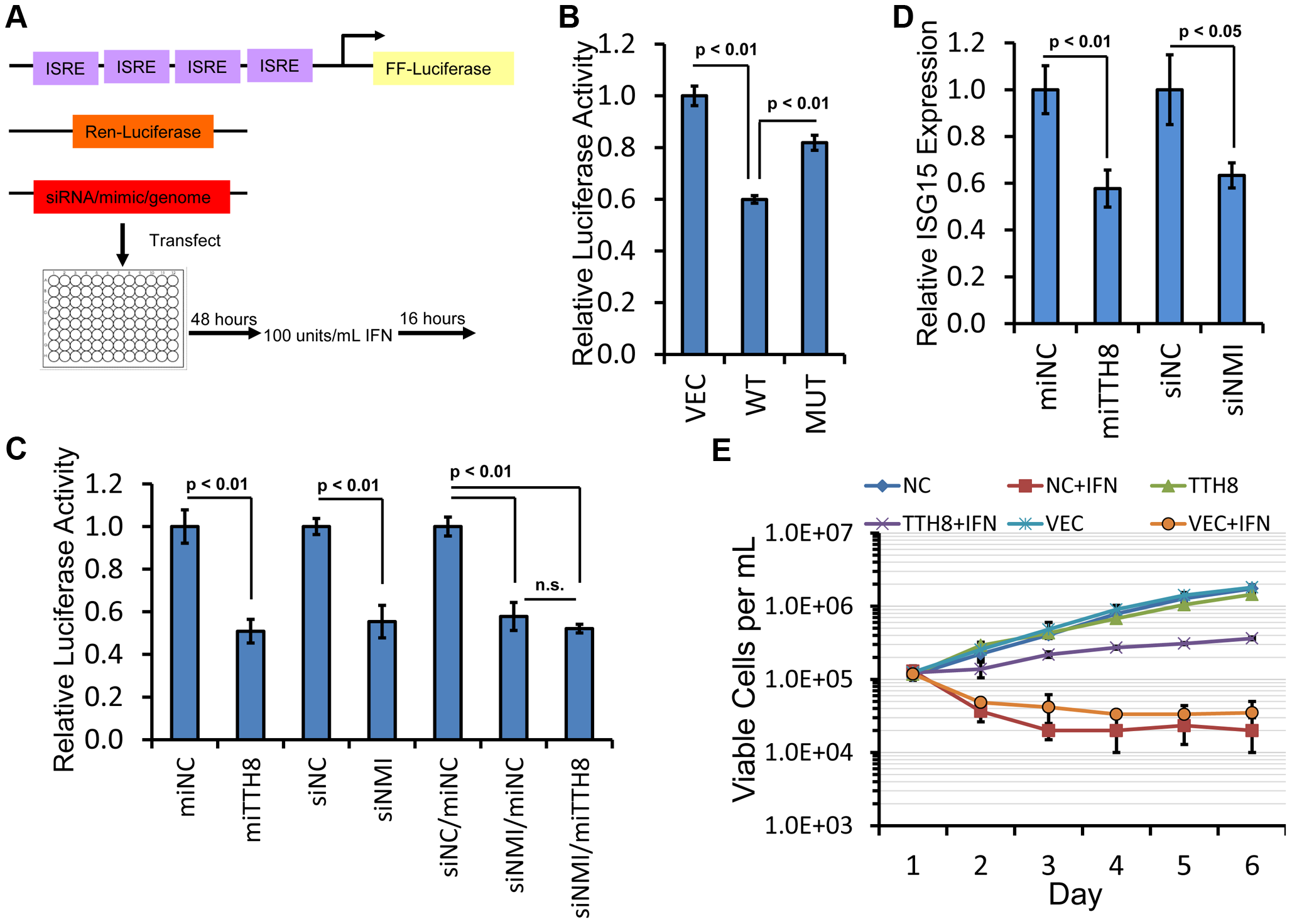 TTV-tth8-miR-T1 or knockdown of NMI inhibits interferon signaling.