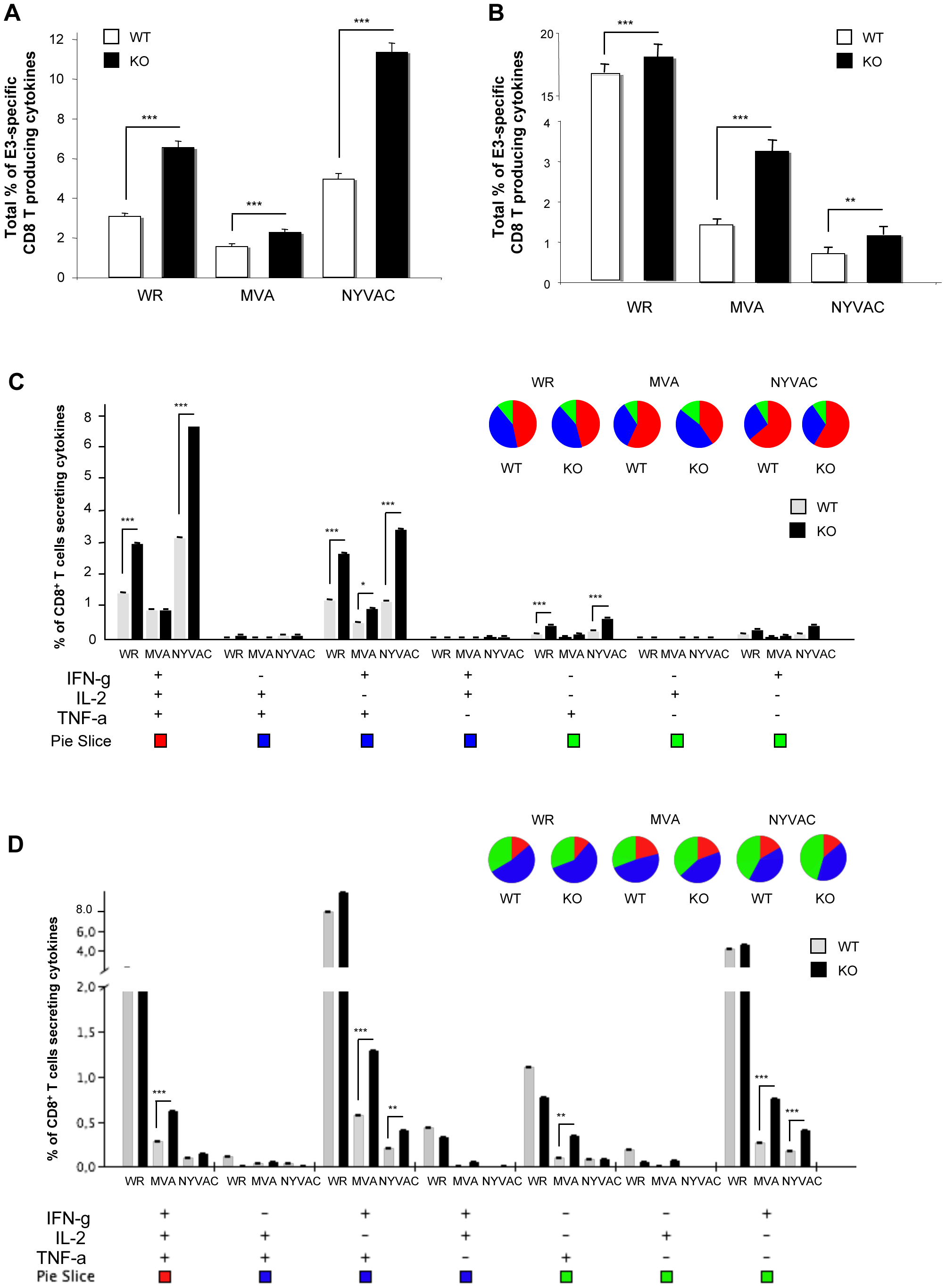 DUSP1 is involved in the regulation of adaptive immune response during VACV infection.