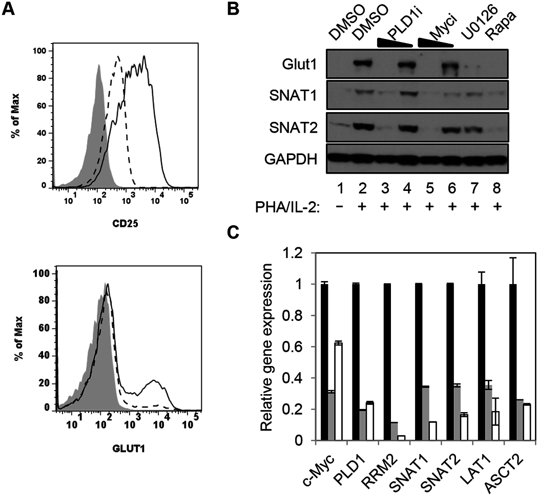 PLD1 activity is required for normal expression of nutrient transporters in activated T cells.