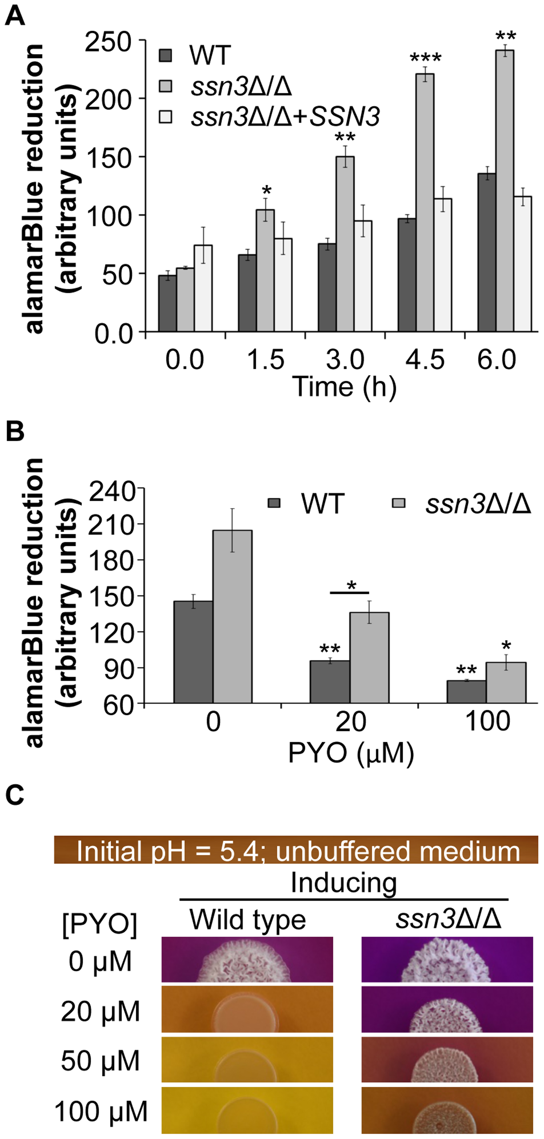 The increased oxidative metabolism of the <i>ssn3</i> mutant directly correlates with wrinkled colony formation.