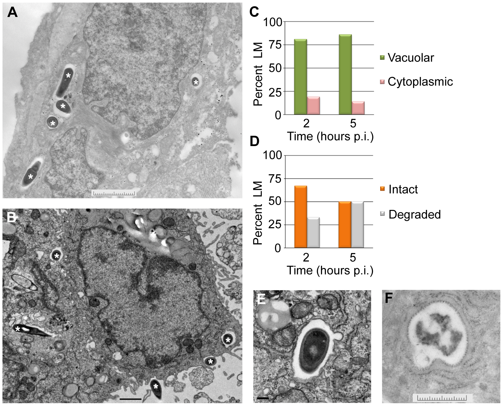 <i>L. monocytogenes</i> (LM) in EVT is largely confined to vacuoles.