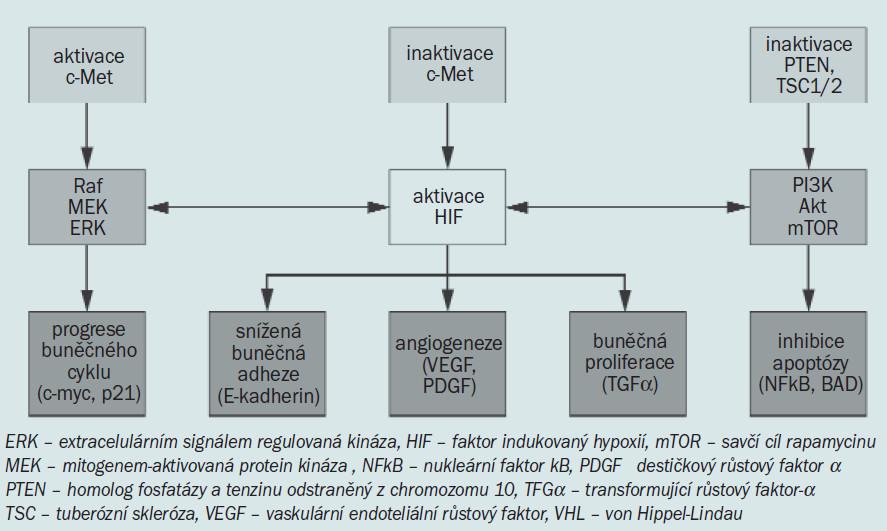 Schéma 2. Genetické a molekulární dráhy RCC. 3 dráhy podílející se na tumorogenezi RCC. Mezi dráhami byl pozorován signifikantní nežádoucí signál, kdy může hrát významnou roli aktivace HIF.
