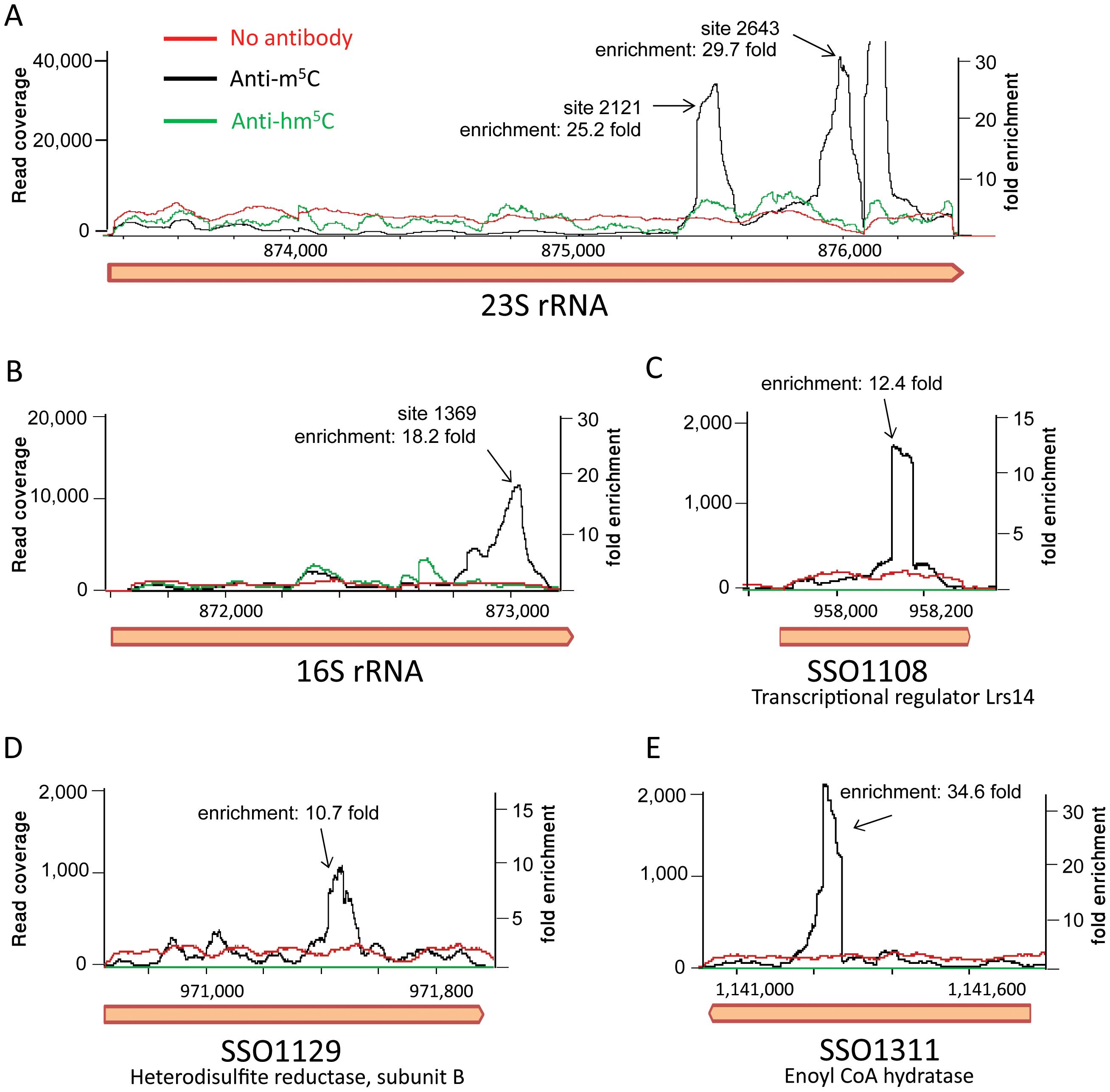 RNA immunoprecipitation with modification-specific antibodies.