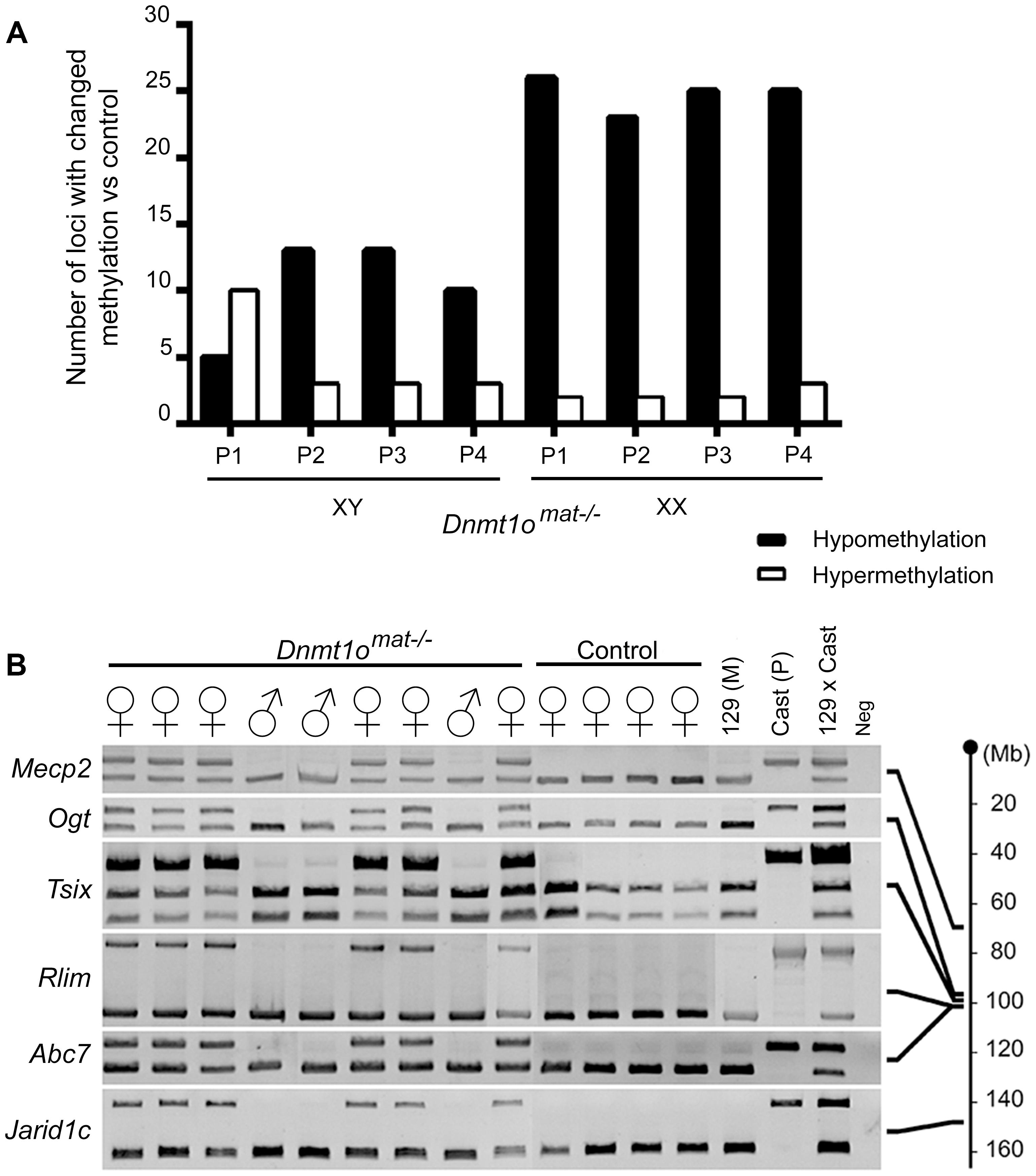 DNA methylation and allelic expression analyses of <i>Dnmt1o<sup>mat−/−</sup></i> female placentae.