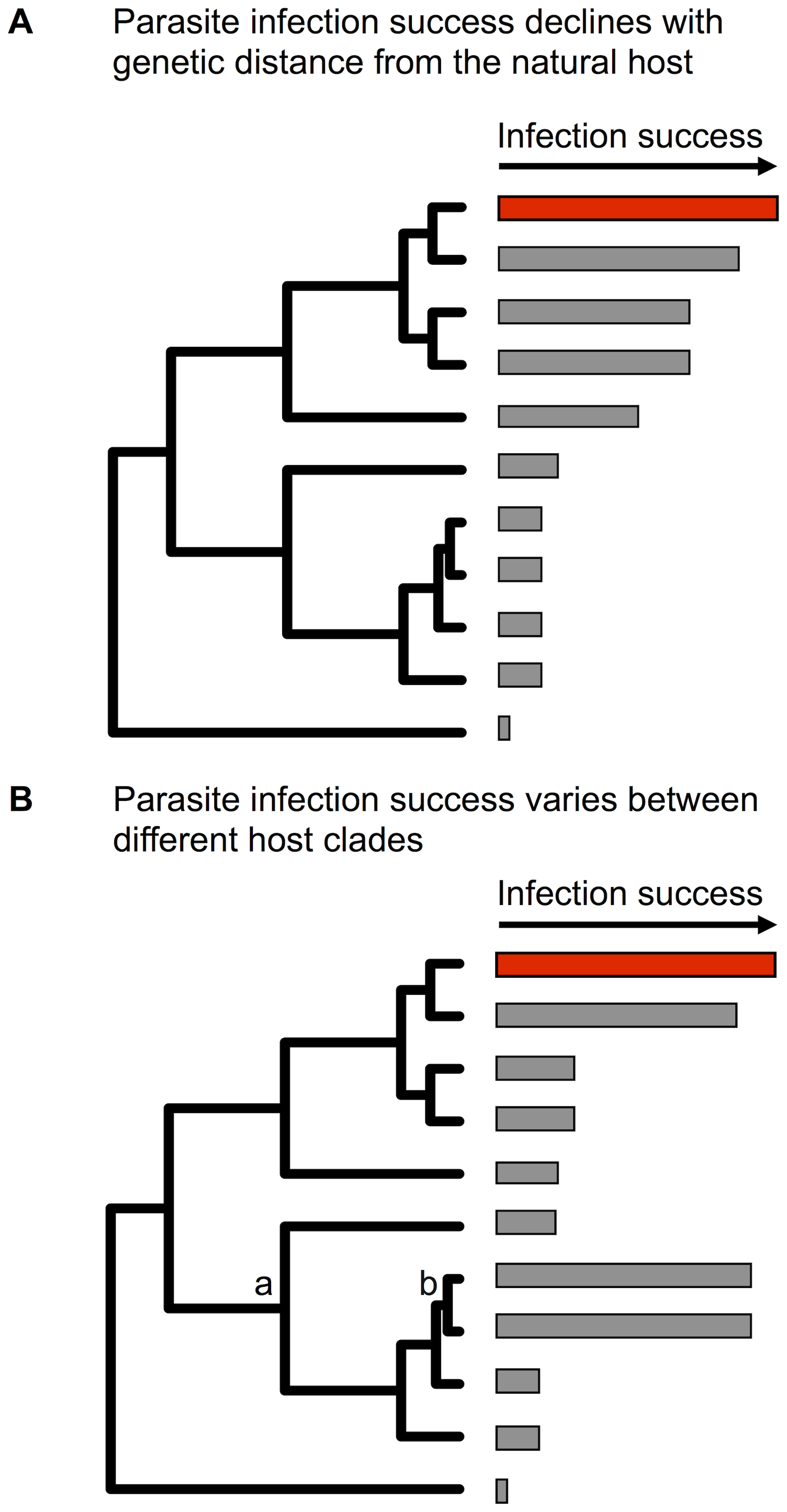 Two ways in which host relatedness may effect a pathogen's ability to host shift.
