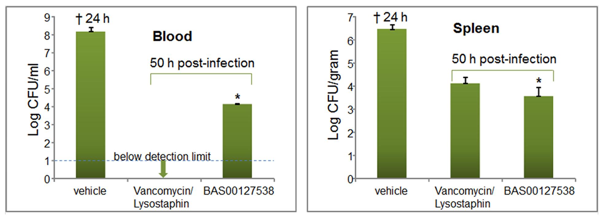 Efficacy of BAS00127538 <i>in vivo</i>.
