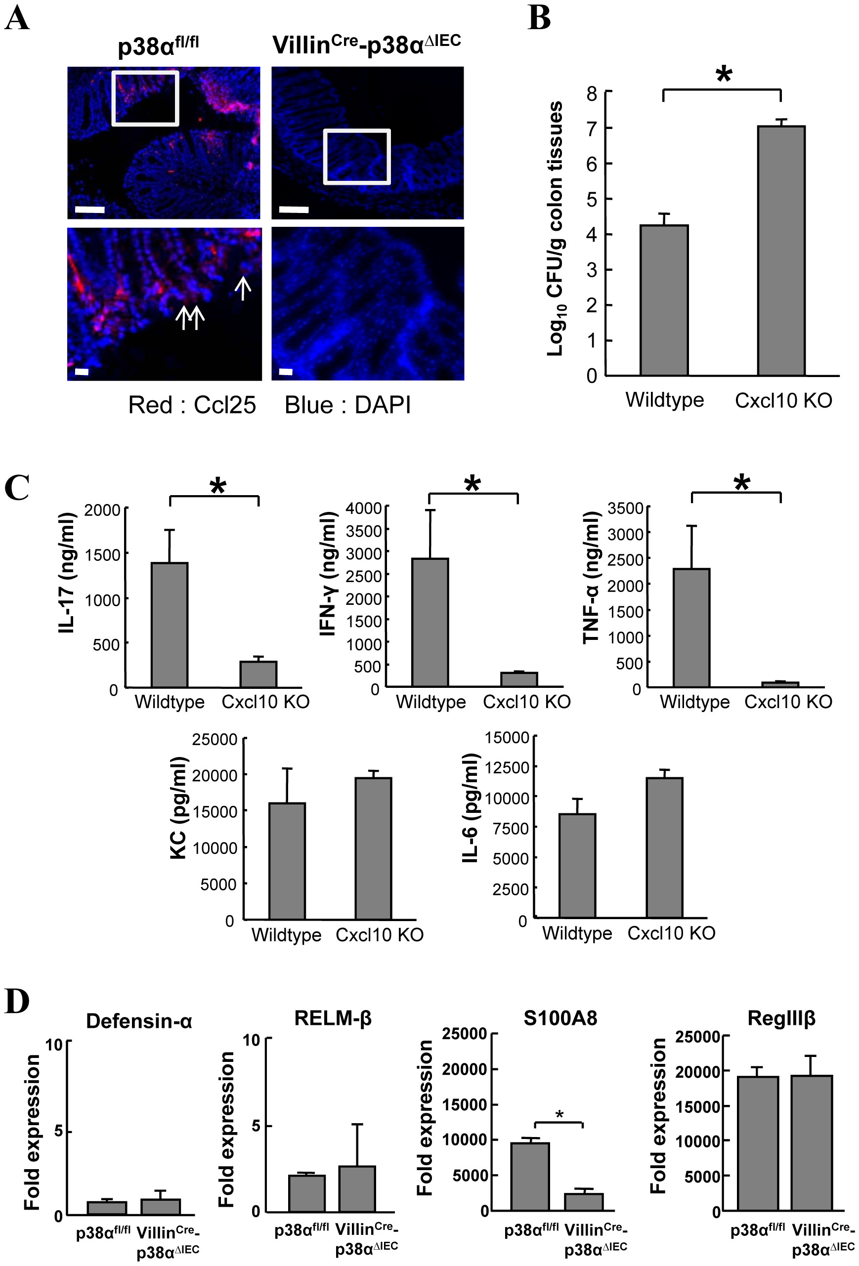 Analysis of chemokines Ccl25 and Cxcl10, and antimicrobial gene expression.