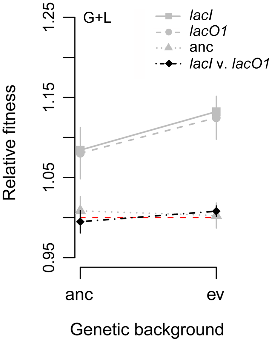 Fitness effect of <i>lacI</i> and <i>lacO1</i> mutations depend on genetic background.