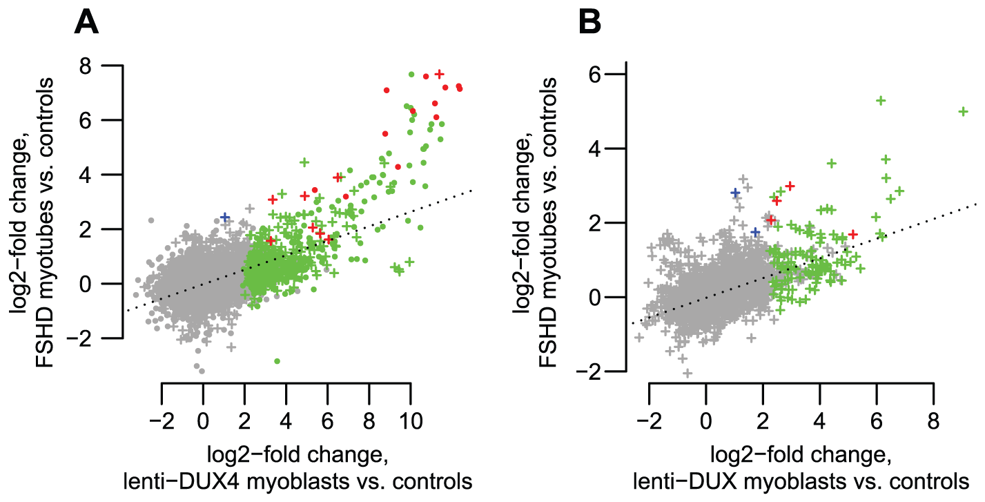 DUX4-bound regions are similarly activated in FSHD patient myotubes and in <i>DUX4</i>-transduced myoblasts.