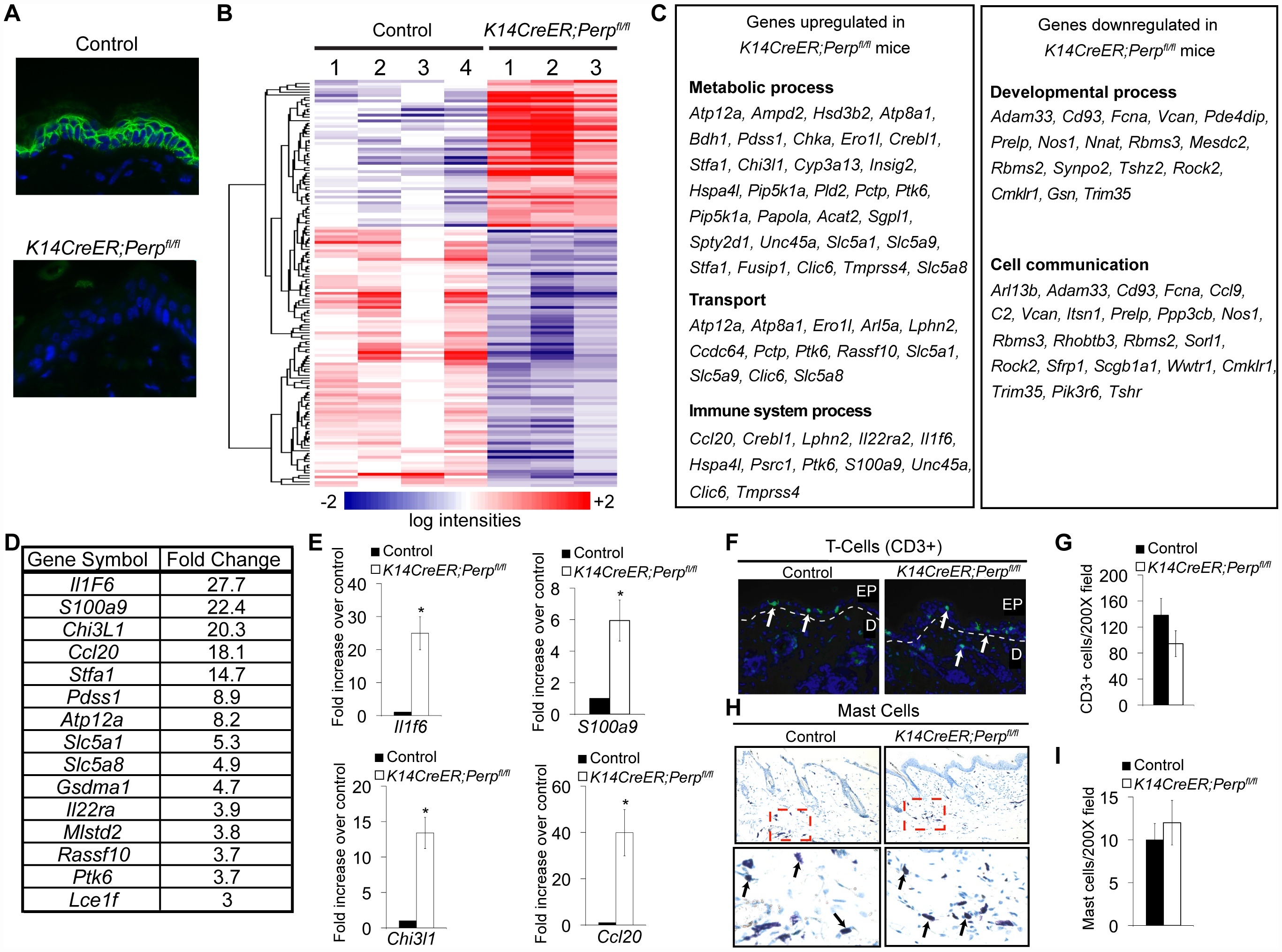 <i>Perp</i>-deficiency induces expression of inflammation-related genes.