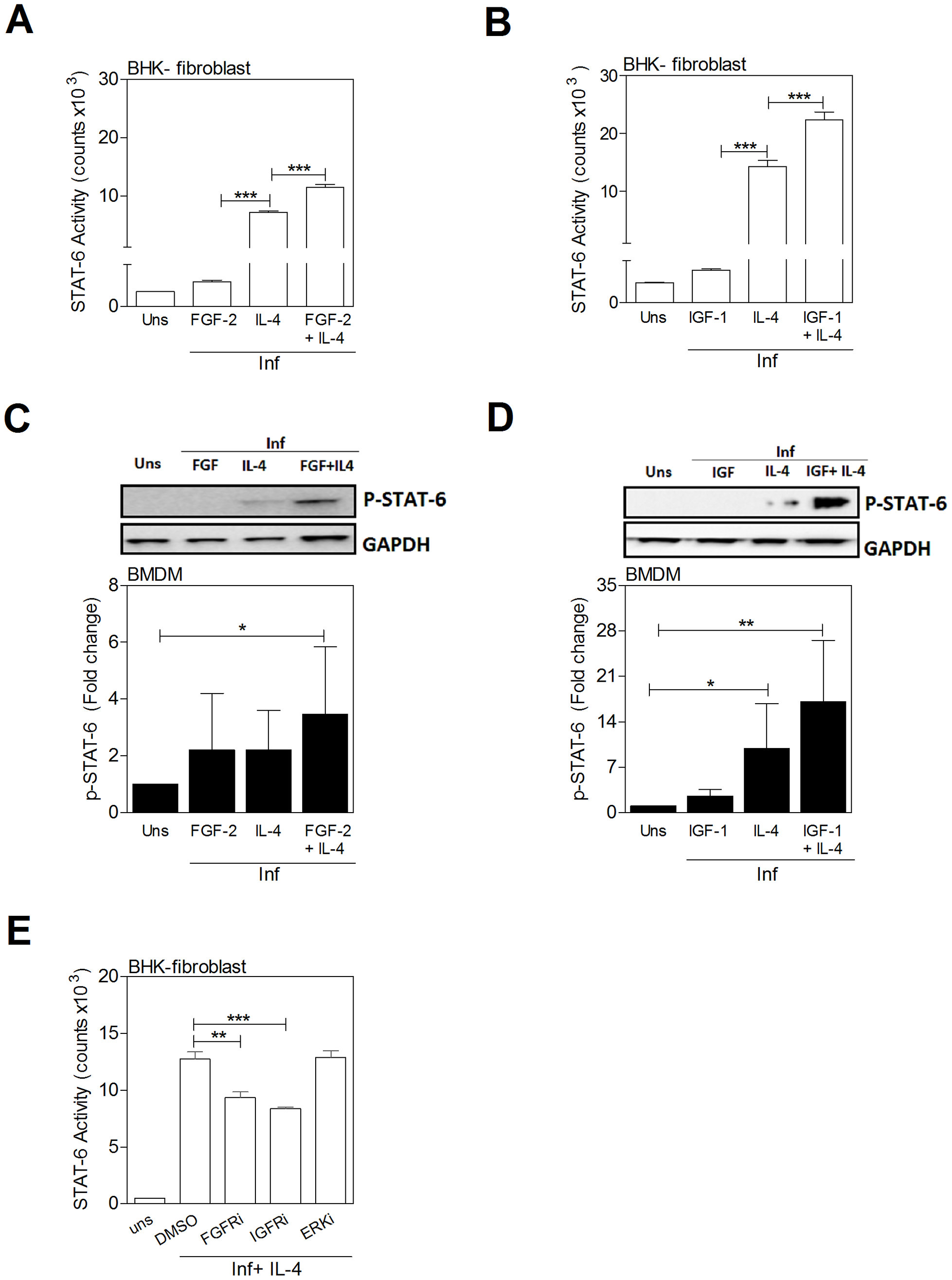 IL-4 and growth factors amplify STAT6 activation.