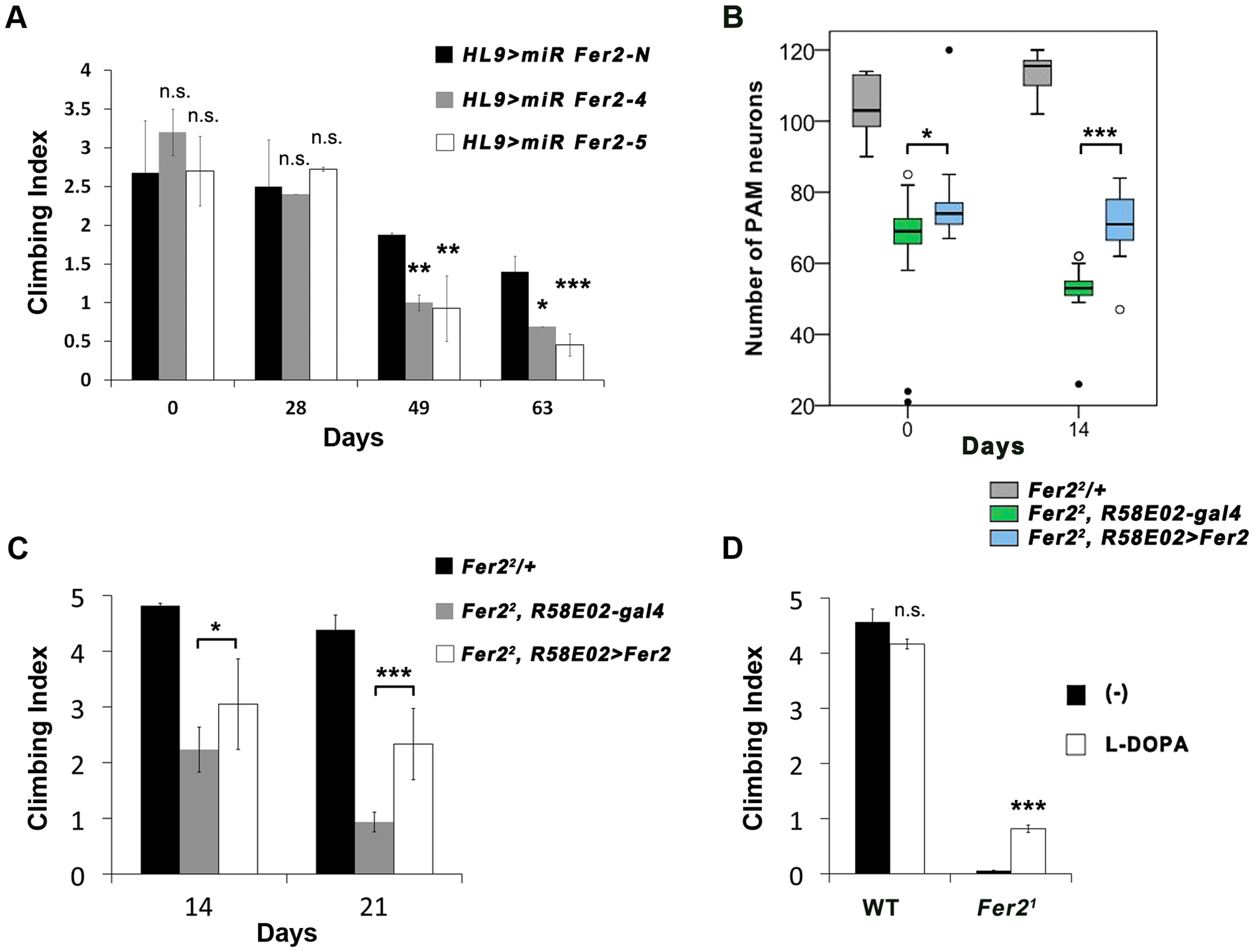 Loss of PAM neurons leads to the locomotor deficits.