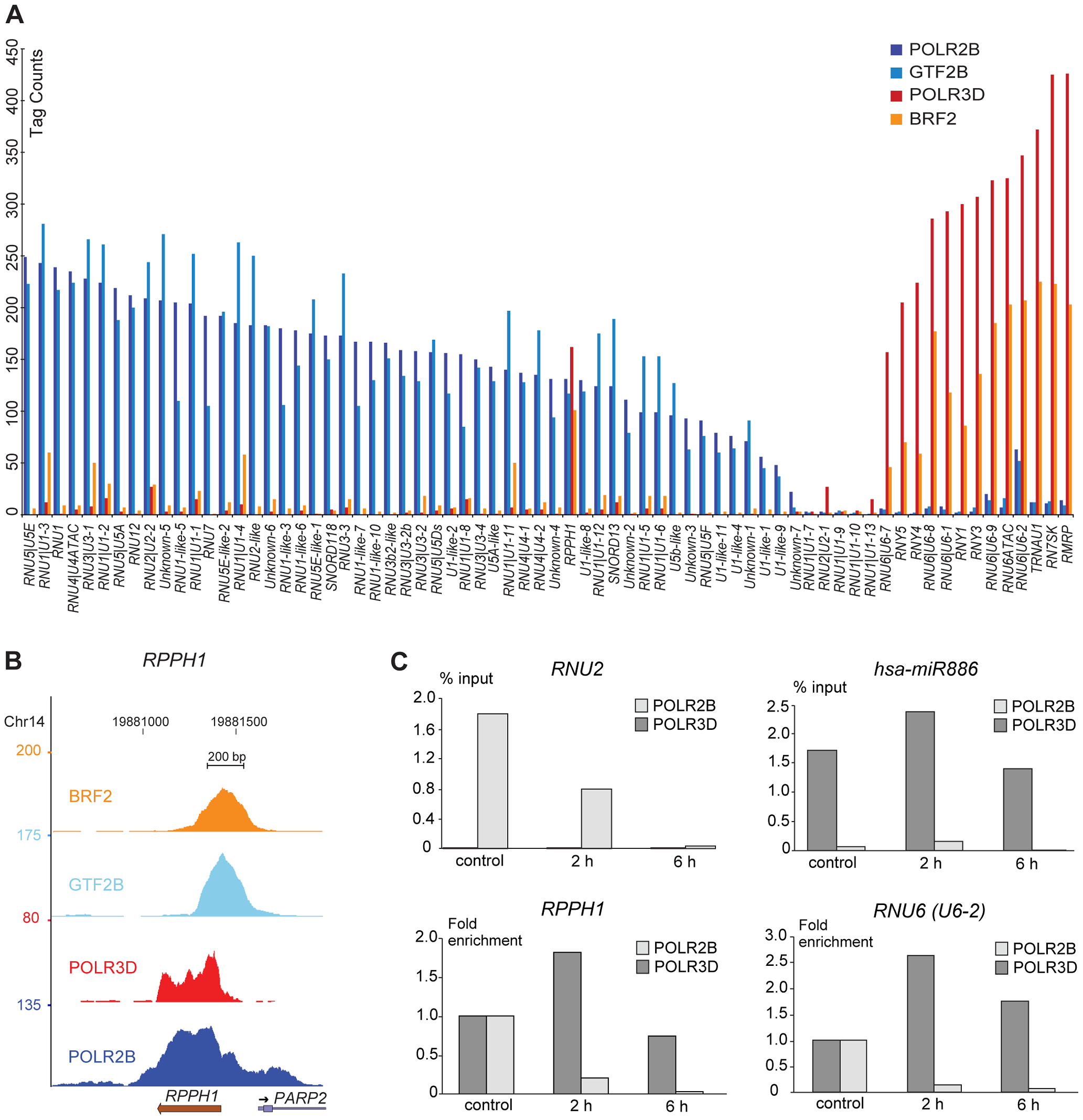 Pol II and III occupancy of snRNA genes.