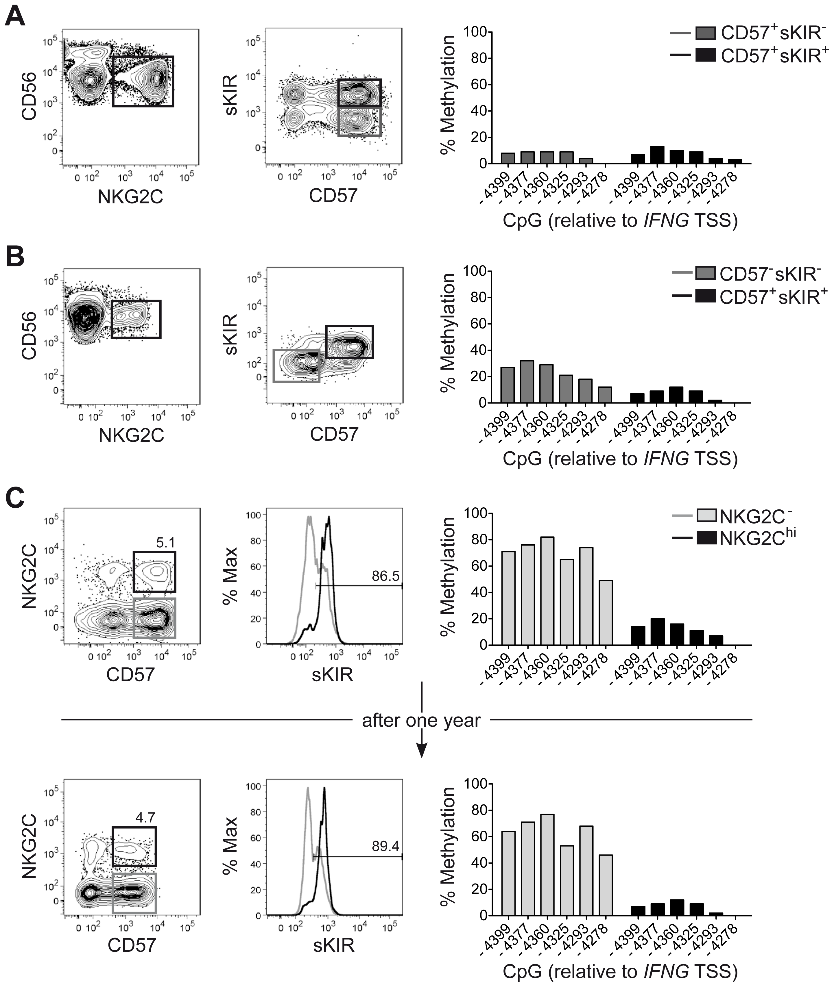 CNS1 demethylation occurs independent of CD57/sKIR expression and is stably imprinted in NKG2C<sup>hi</sup> NK cells.