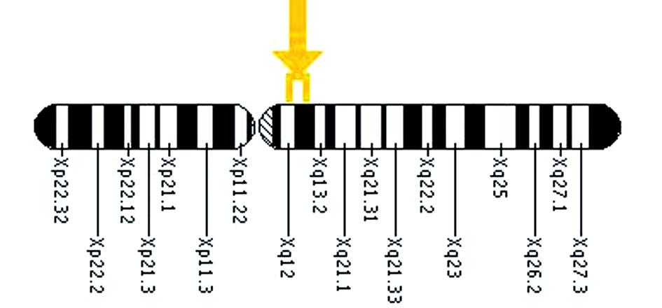 Umístění genu EDARADD na 1. chromozomu.